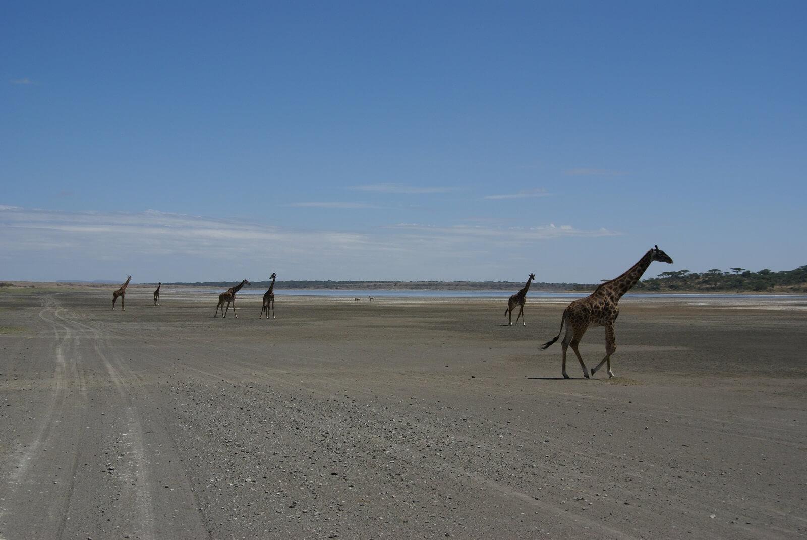 Serengeti-Ndutu
