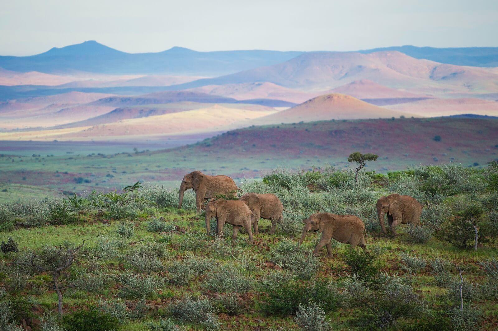 An die Wüste angepasste Tierwelt