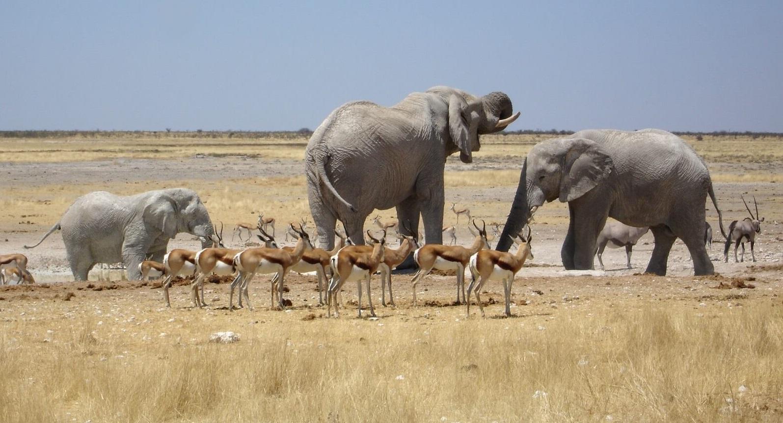 Tiere der Wüste