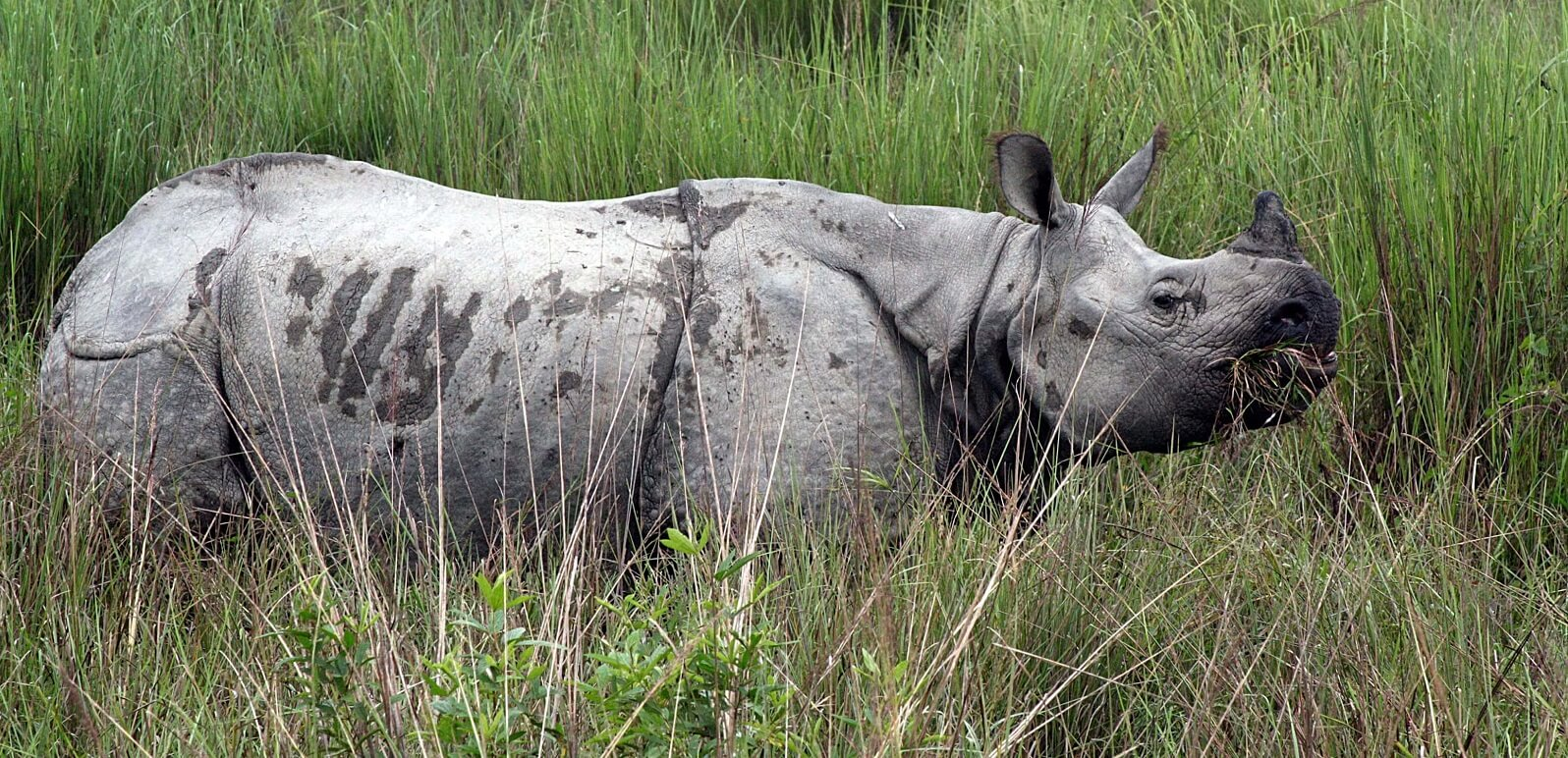 Kaziranga Nationalpark