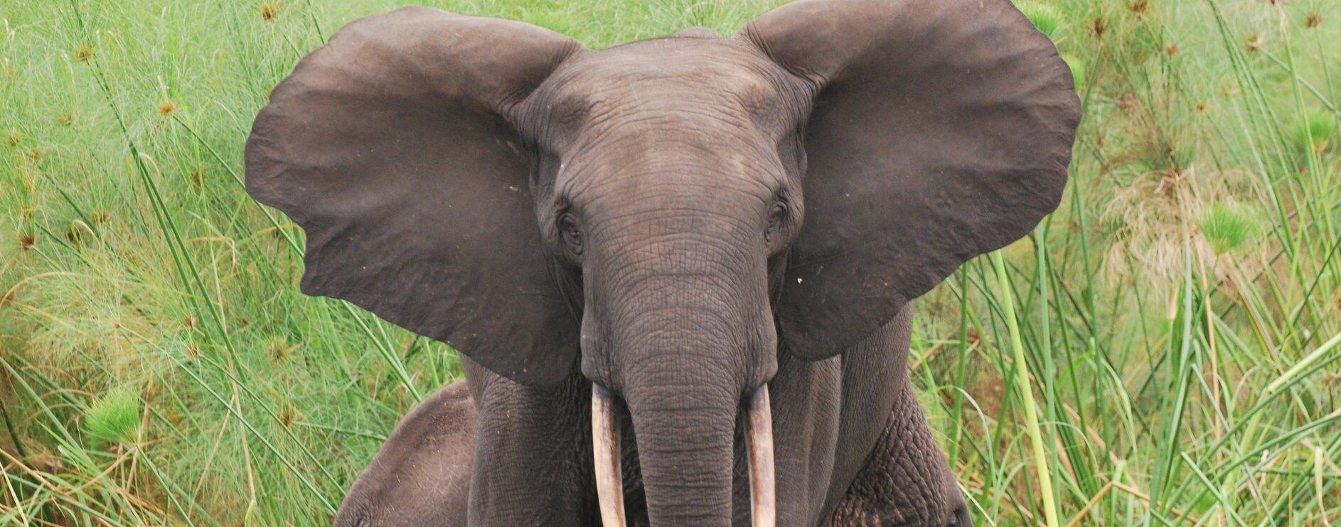 Elefanten am Strand