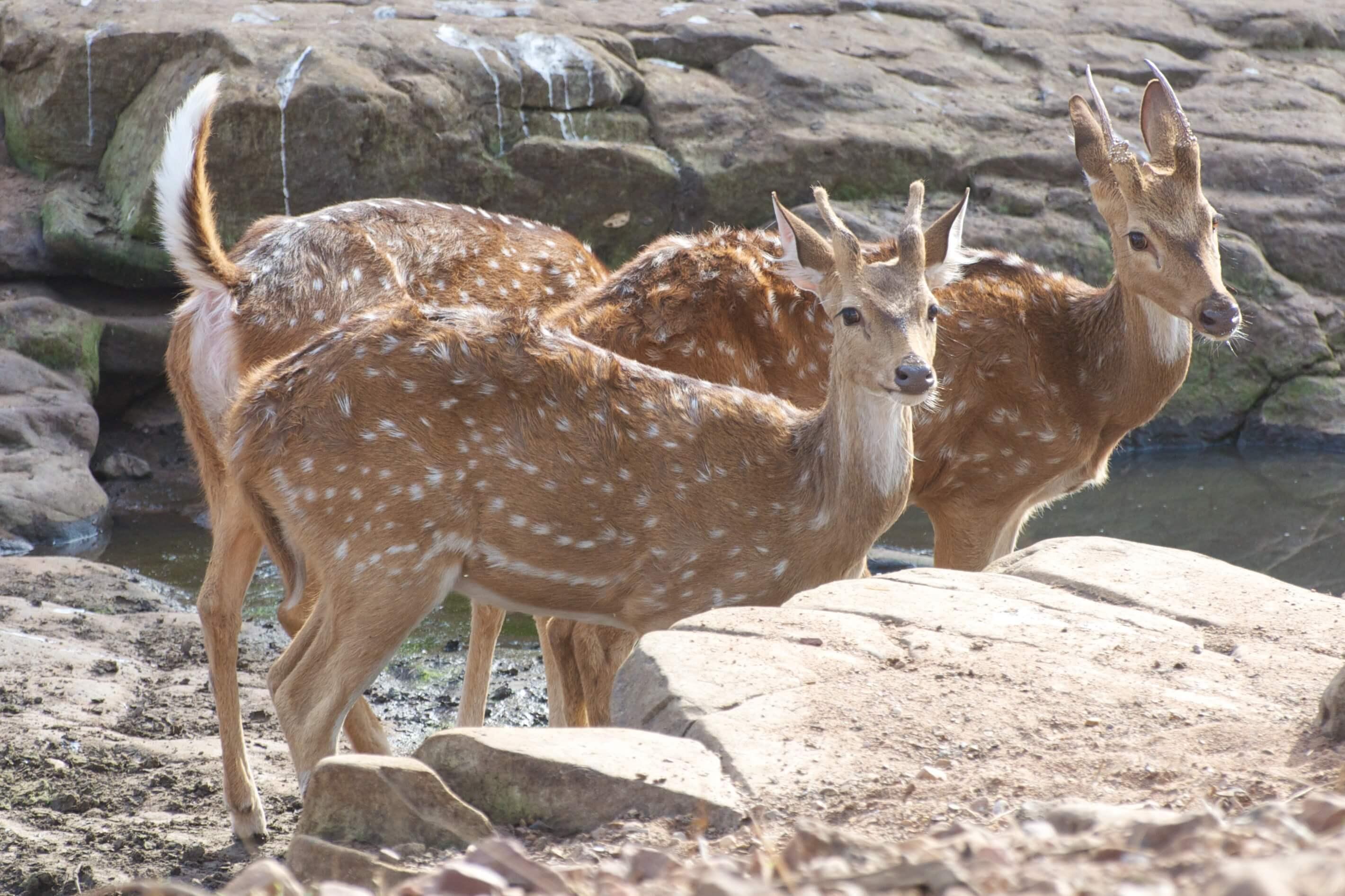 Ranthambore-National Park