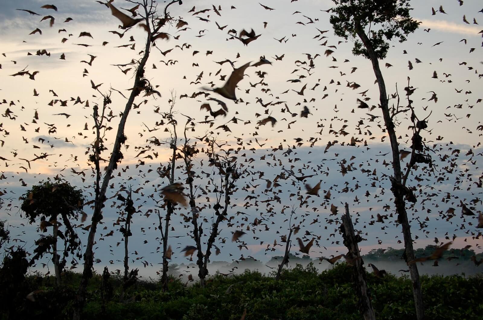 Die Fledermaus-Migration