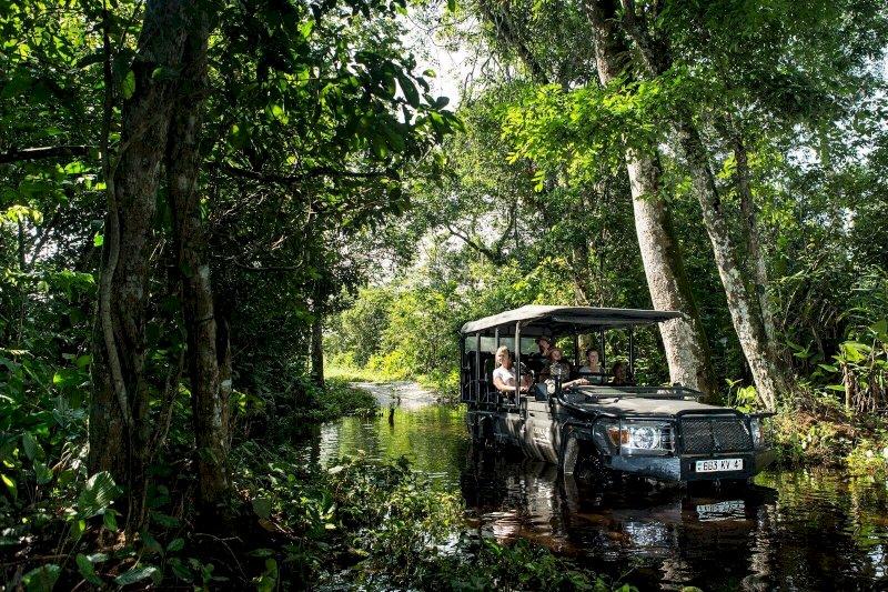 Der größte Urwald in Zentralafrika
