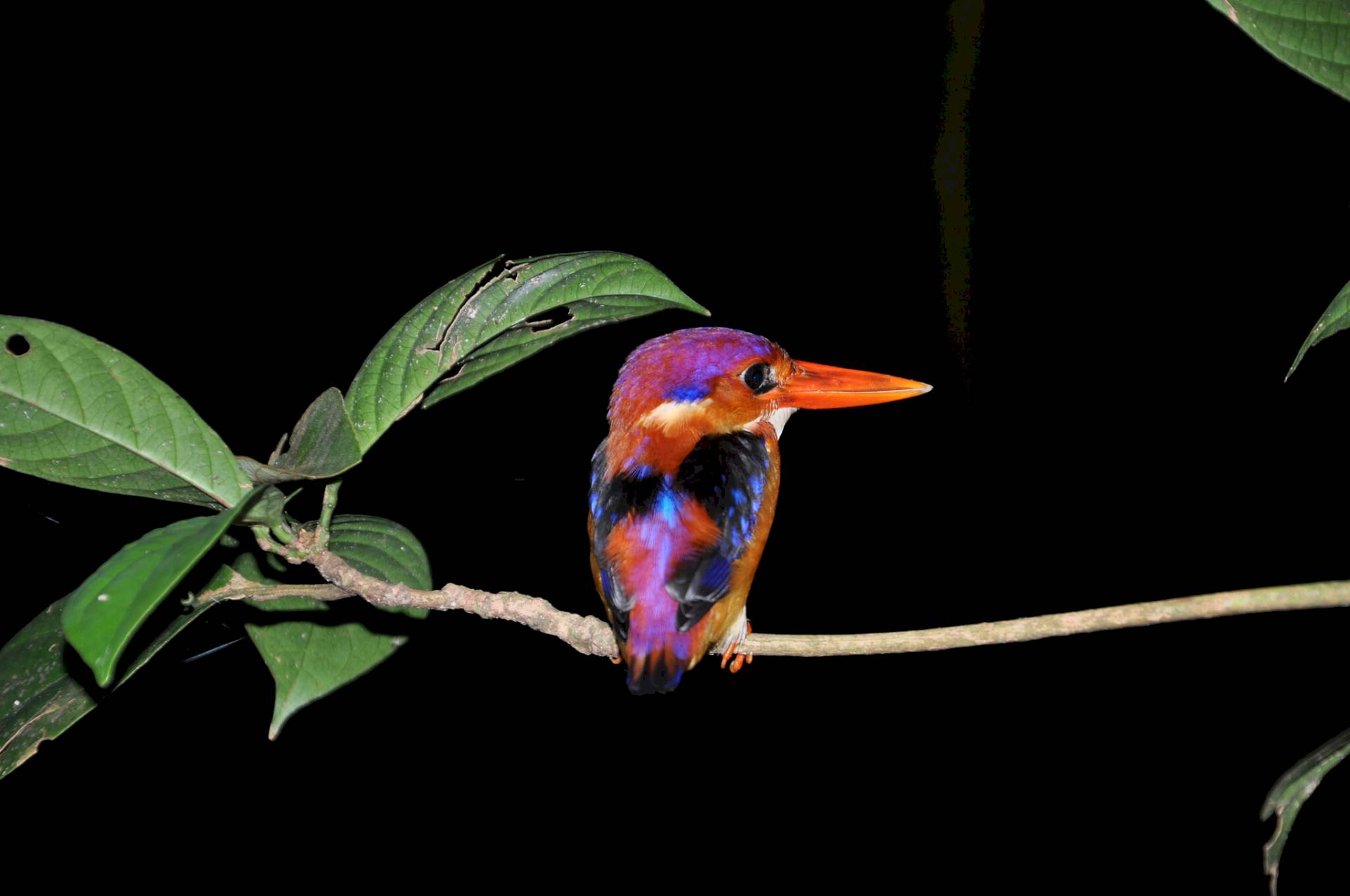 Kinabatangan Wildlife Sanctuary