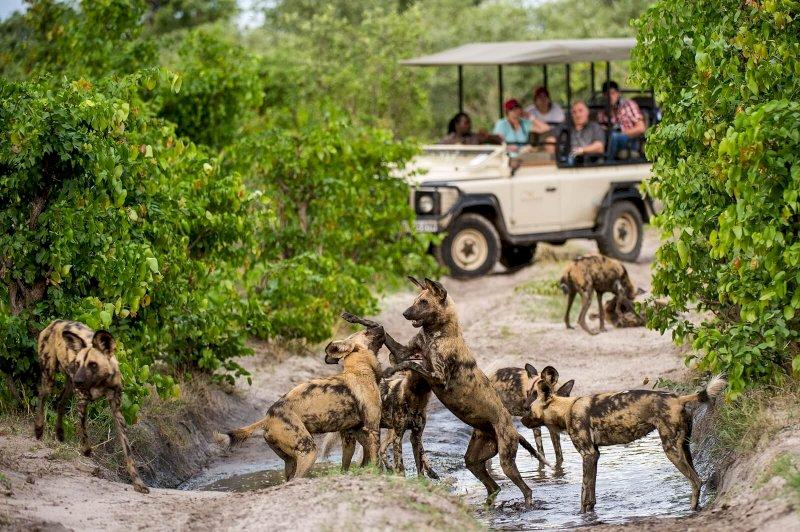 Unübertroffene Safarierlebnisse