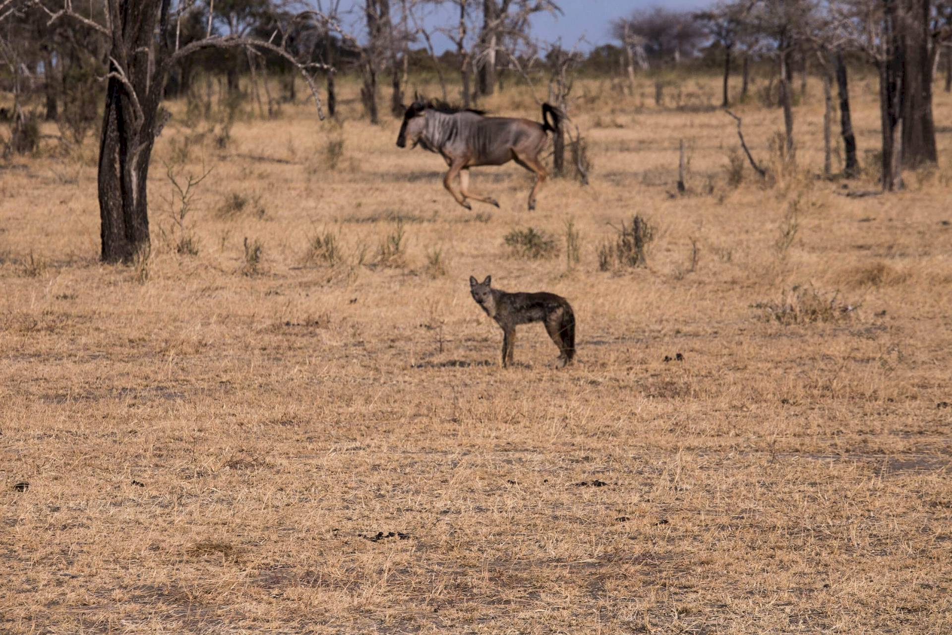 Selous Nationalpark