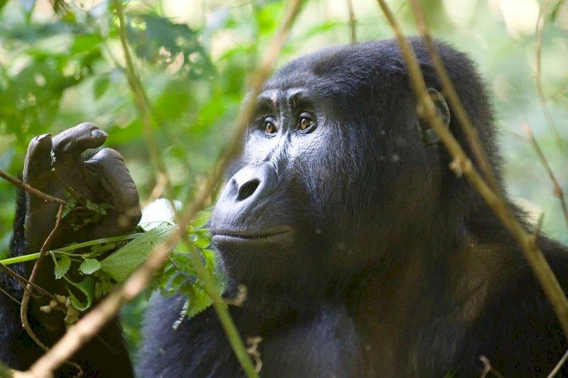Wo Primaten zuhause sind