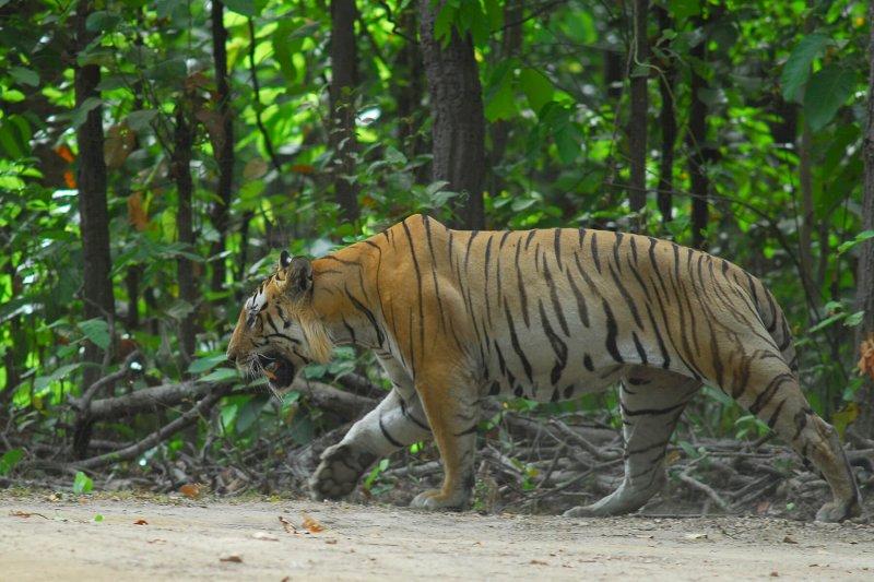 Bandhavgahr-Magadhi