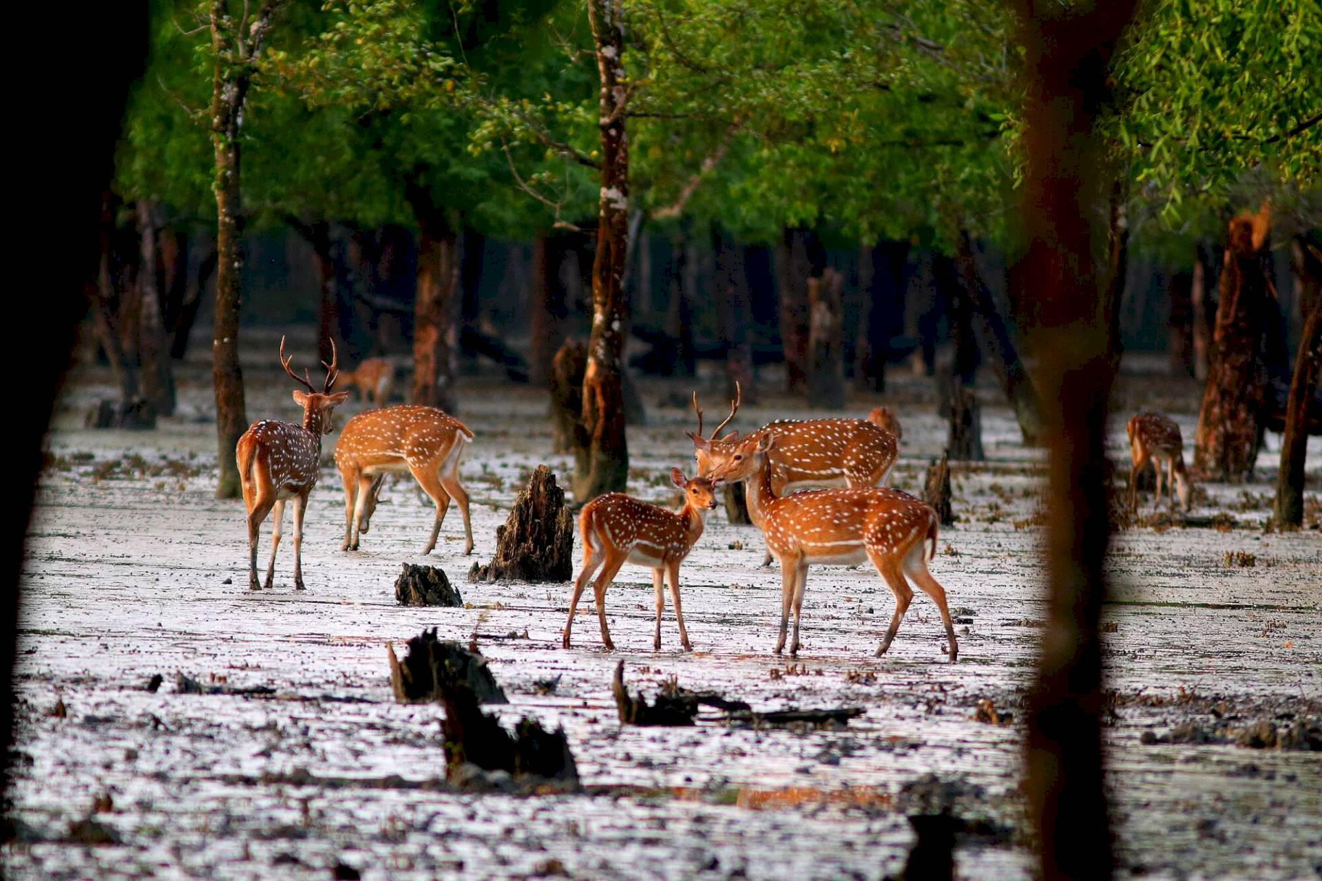 Sundarbans-Nationalpark