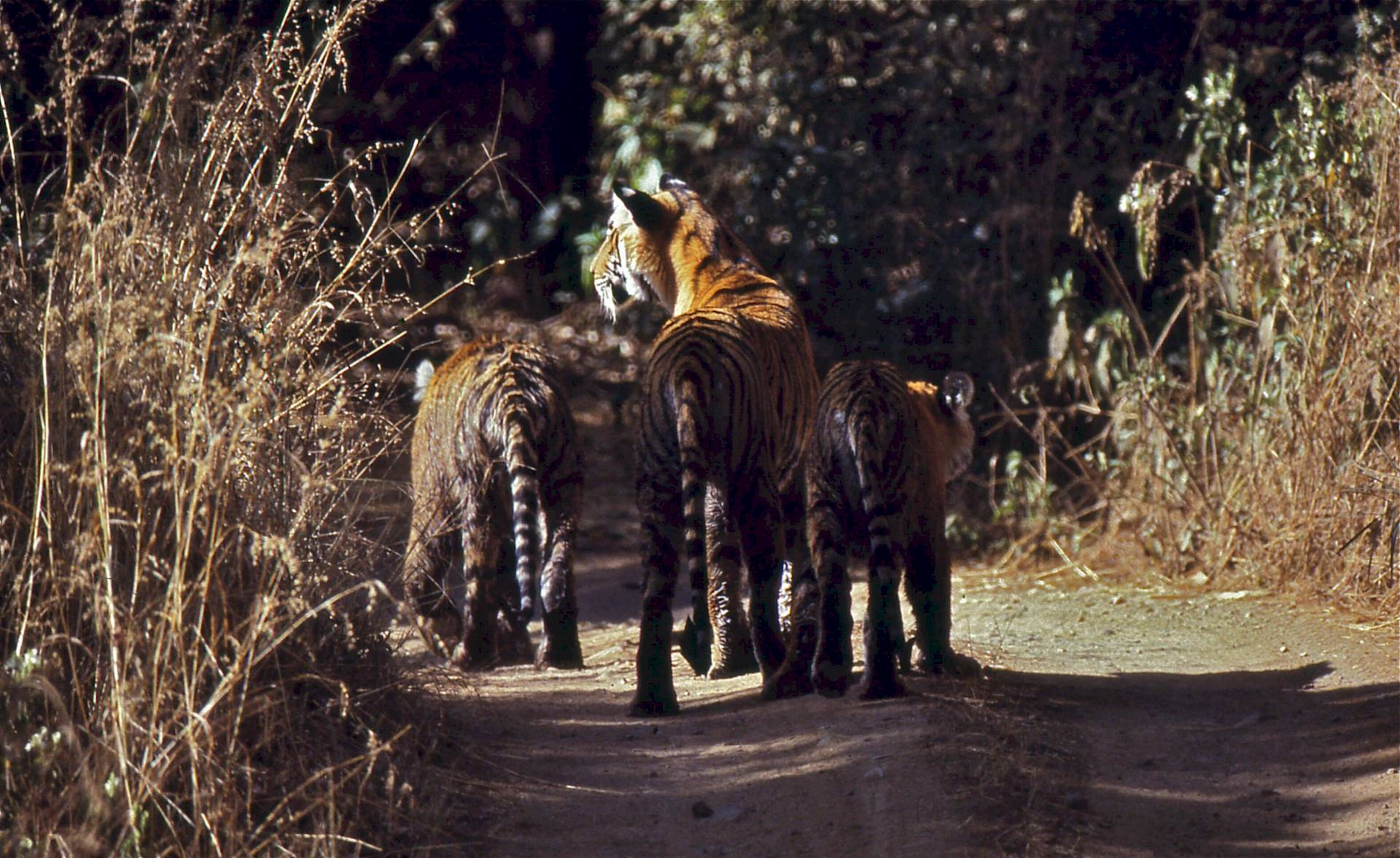 Ranthambore-National Park