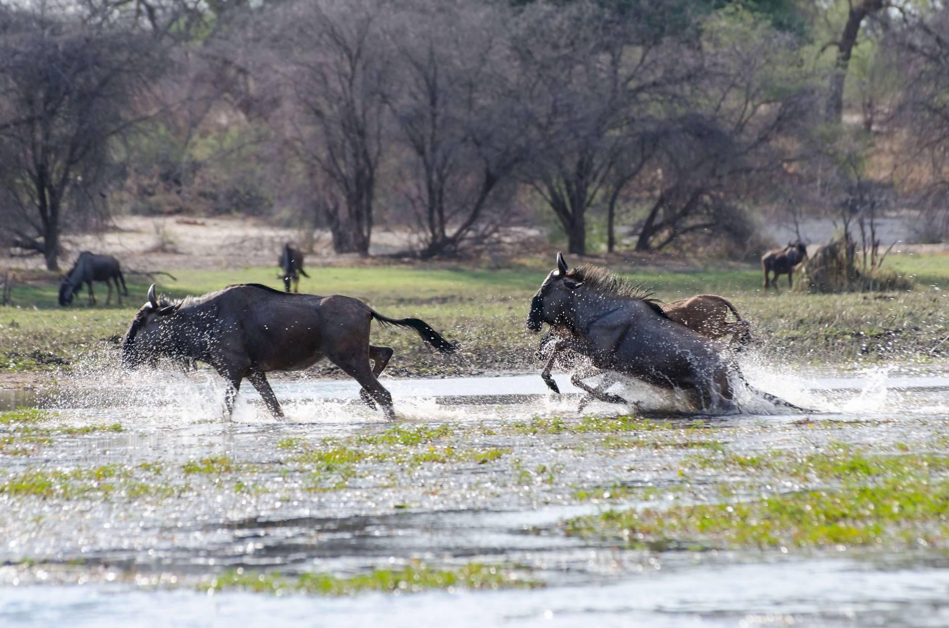 Makgadikgadi Pans Nationalpark