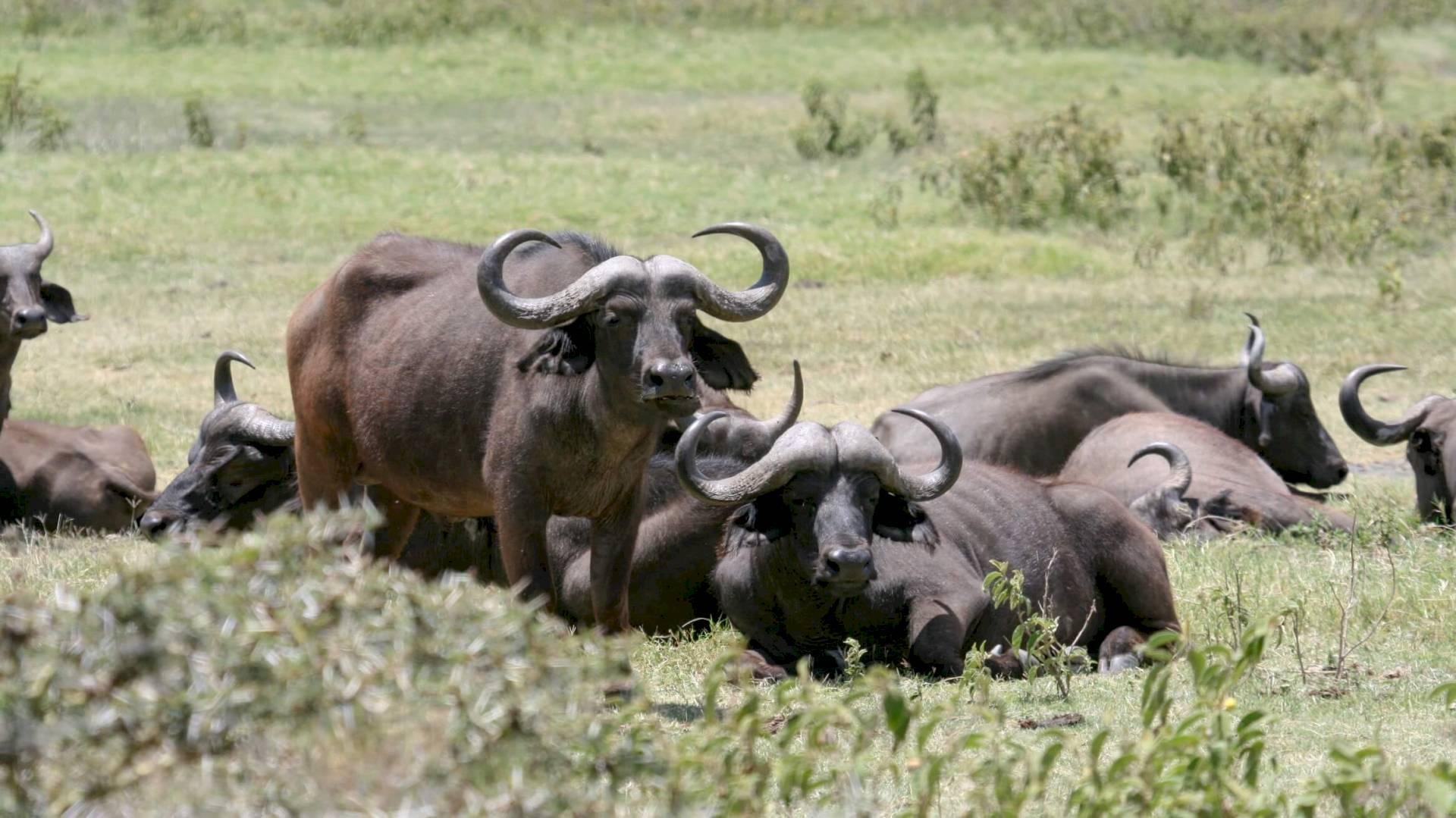 Arusha-Nationalpark