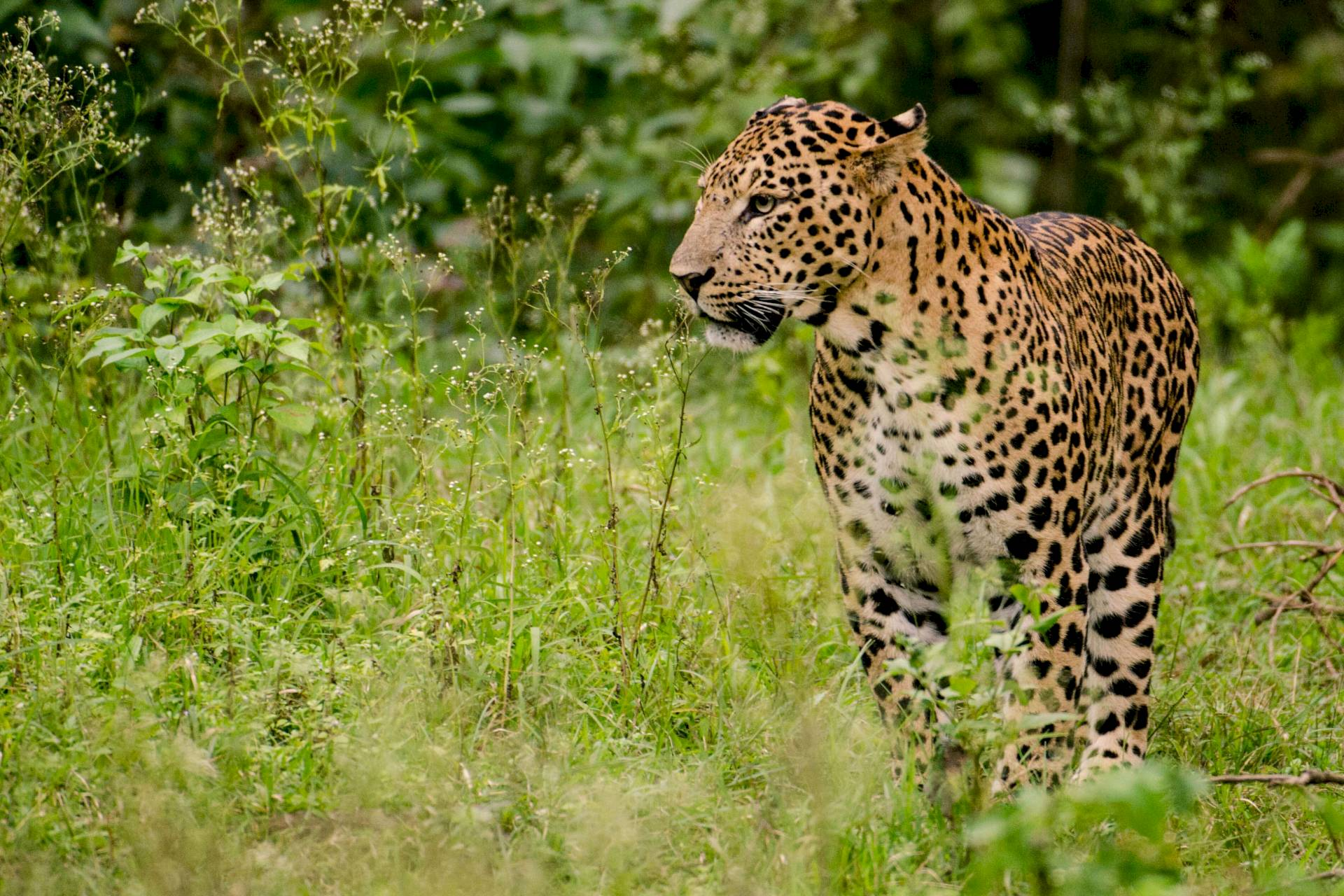 Nagarhole-National Park
