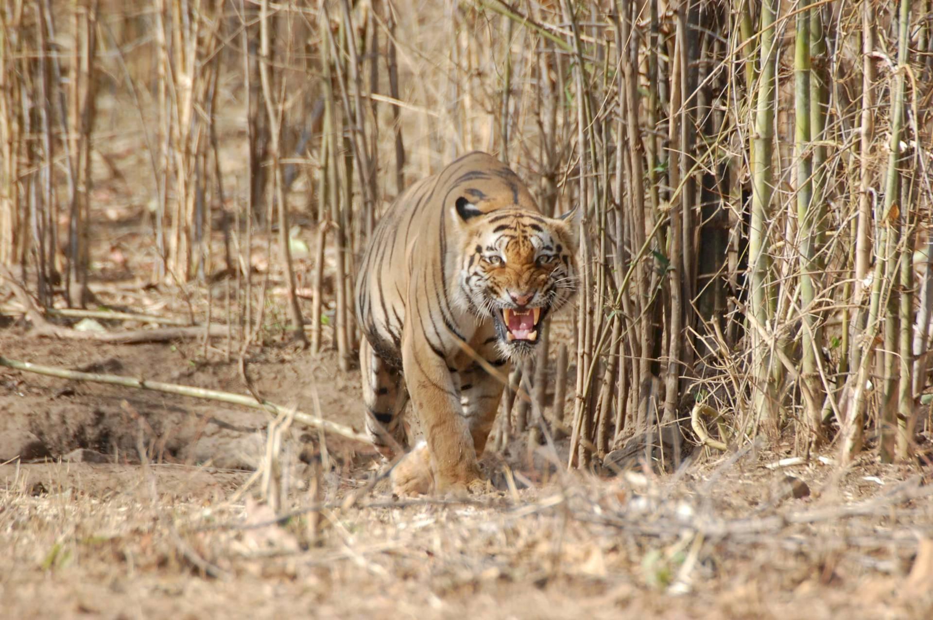 Tadoba Andhari Tiger Reserve