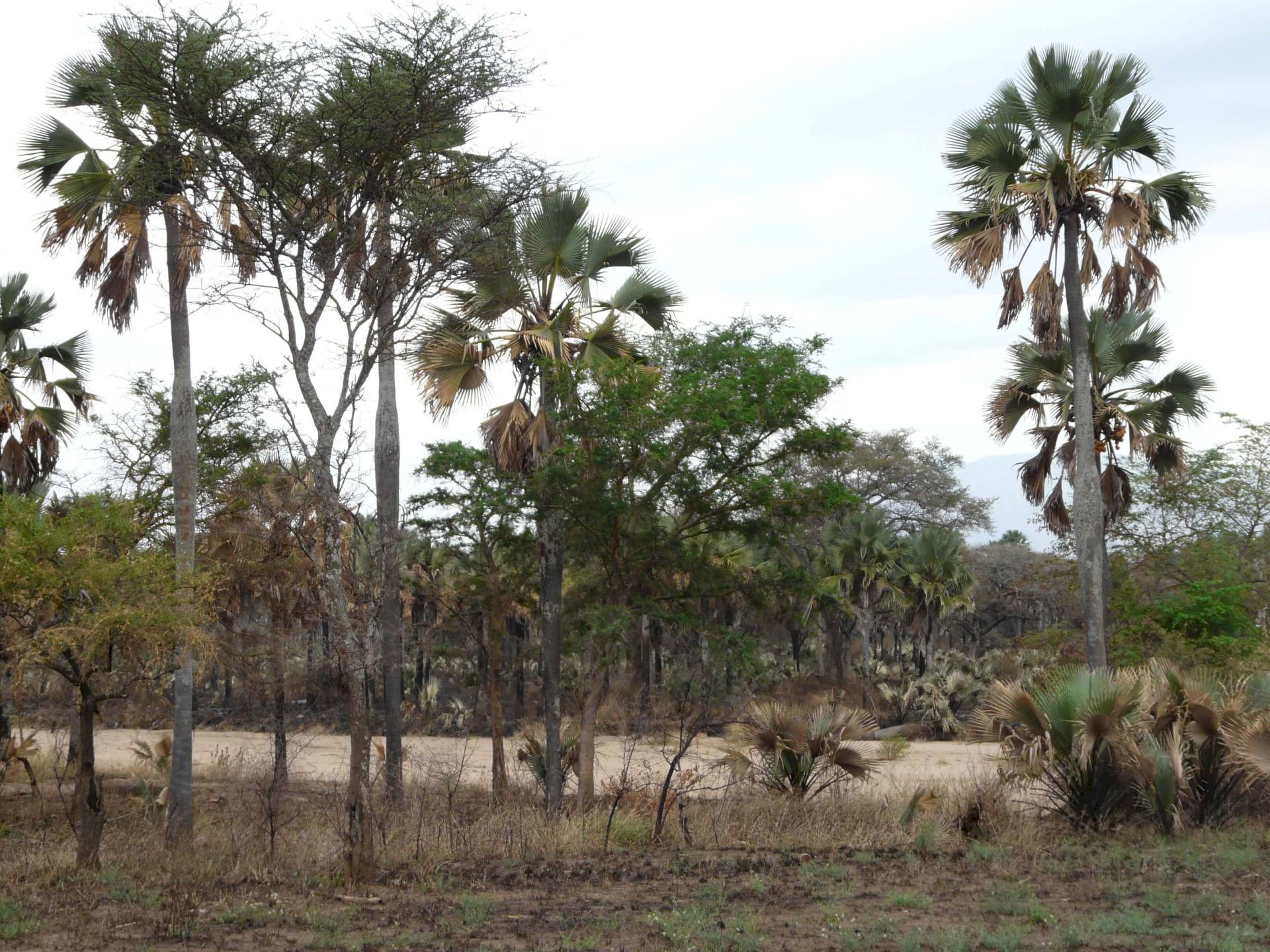 Kidepo-Nationalpark