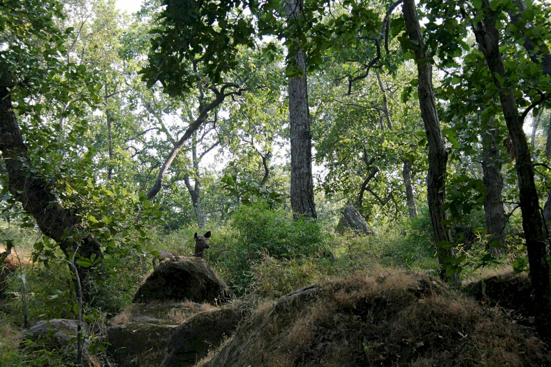 Bandhavgahr-Tala