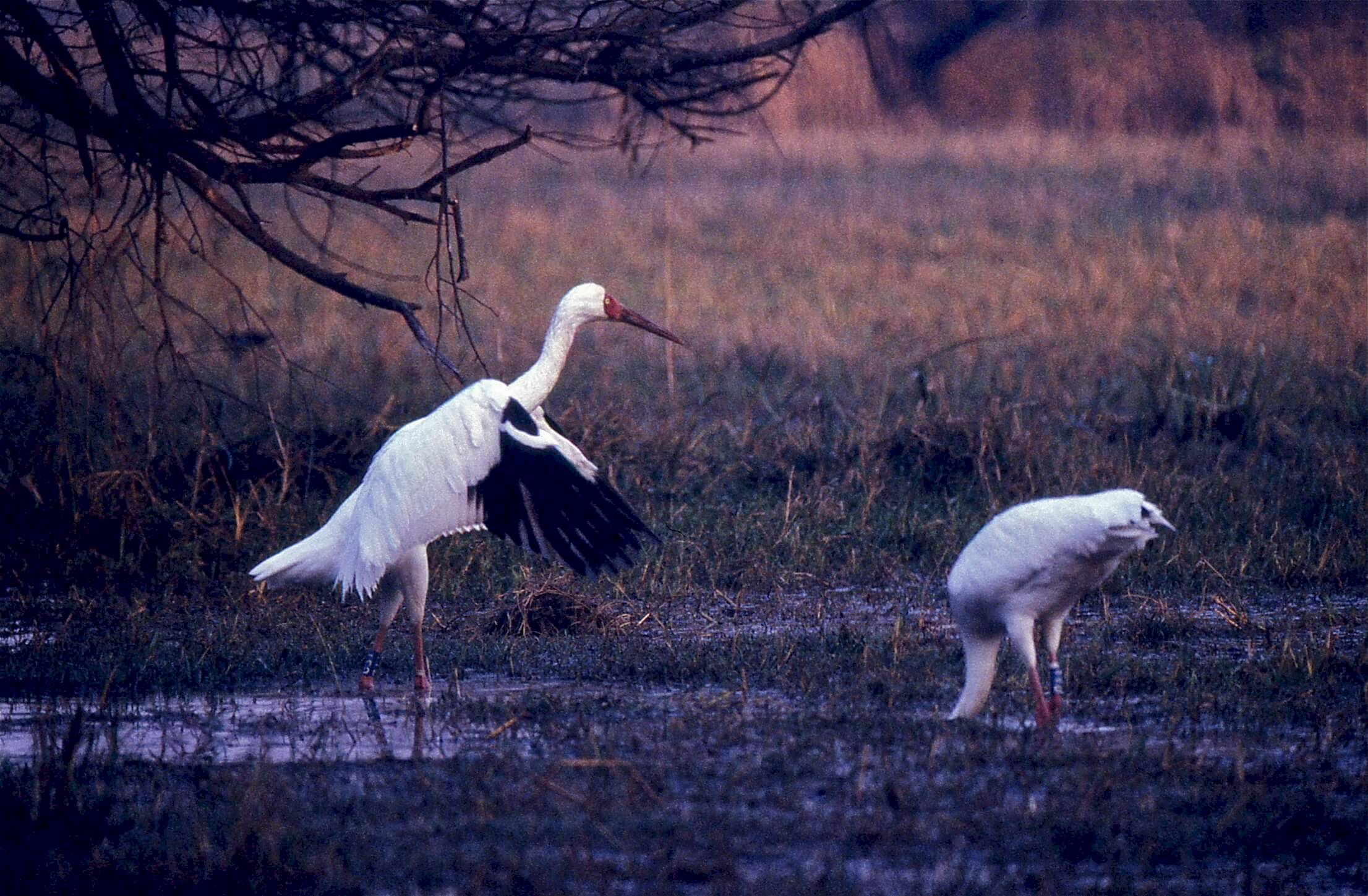 Keoladeo-Nationalpark