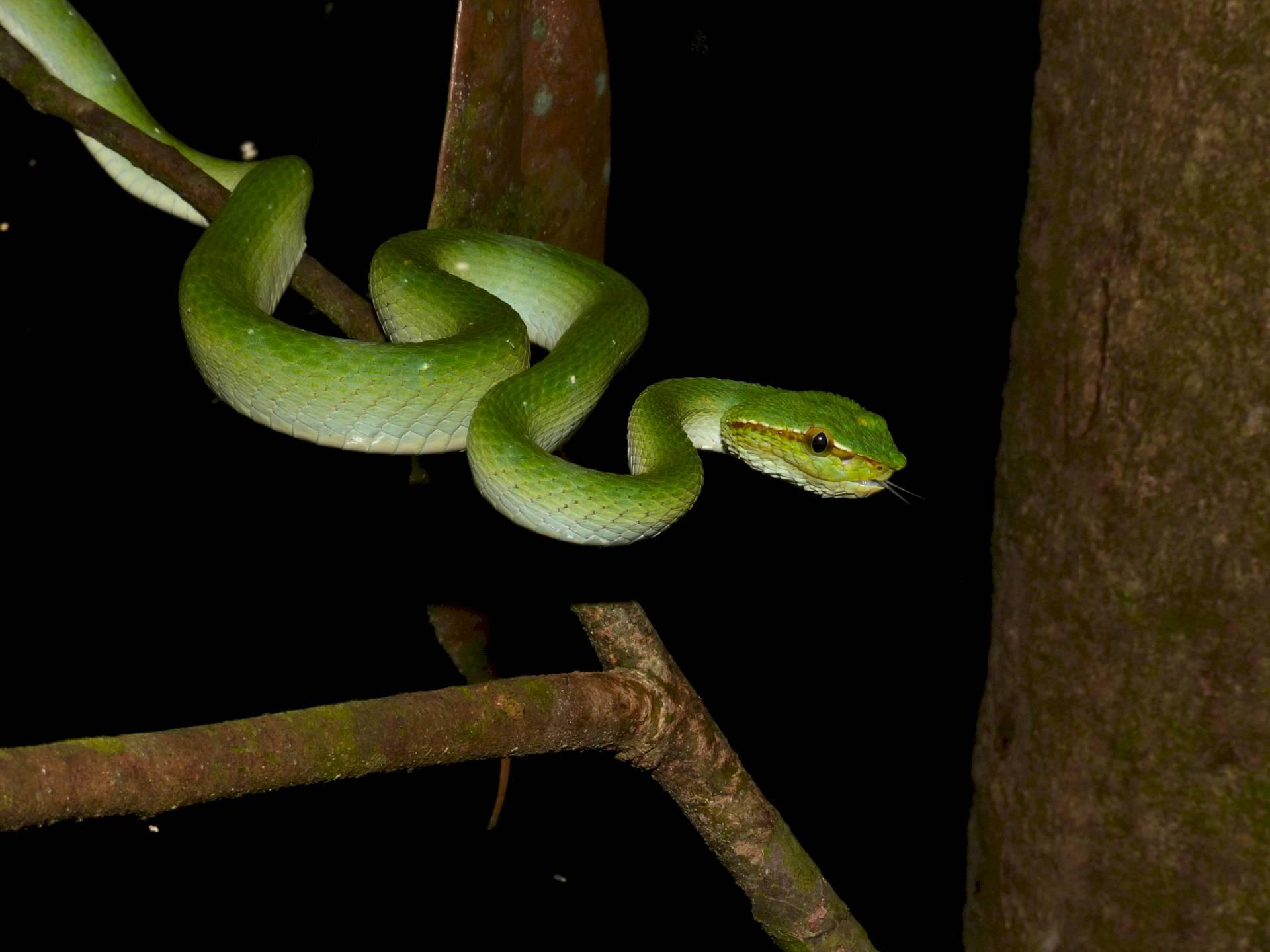 Kuching Wetlands-Nationalpark