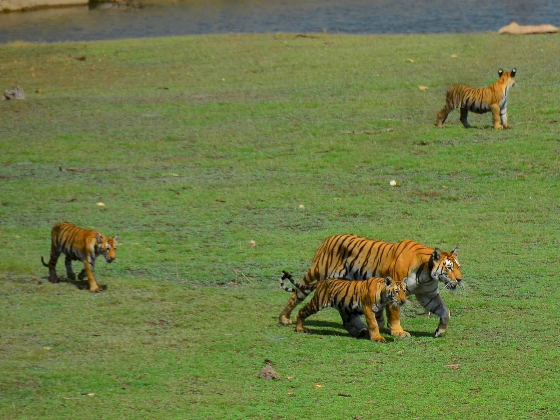 Pench-Nationalpark