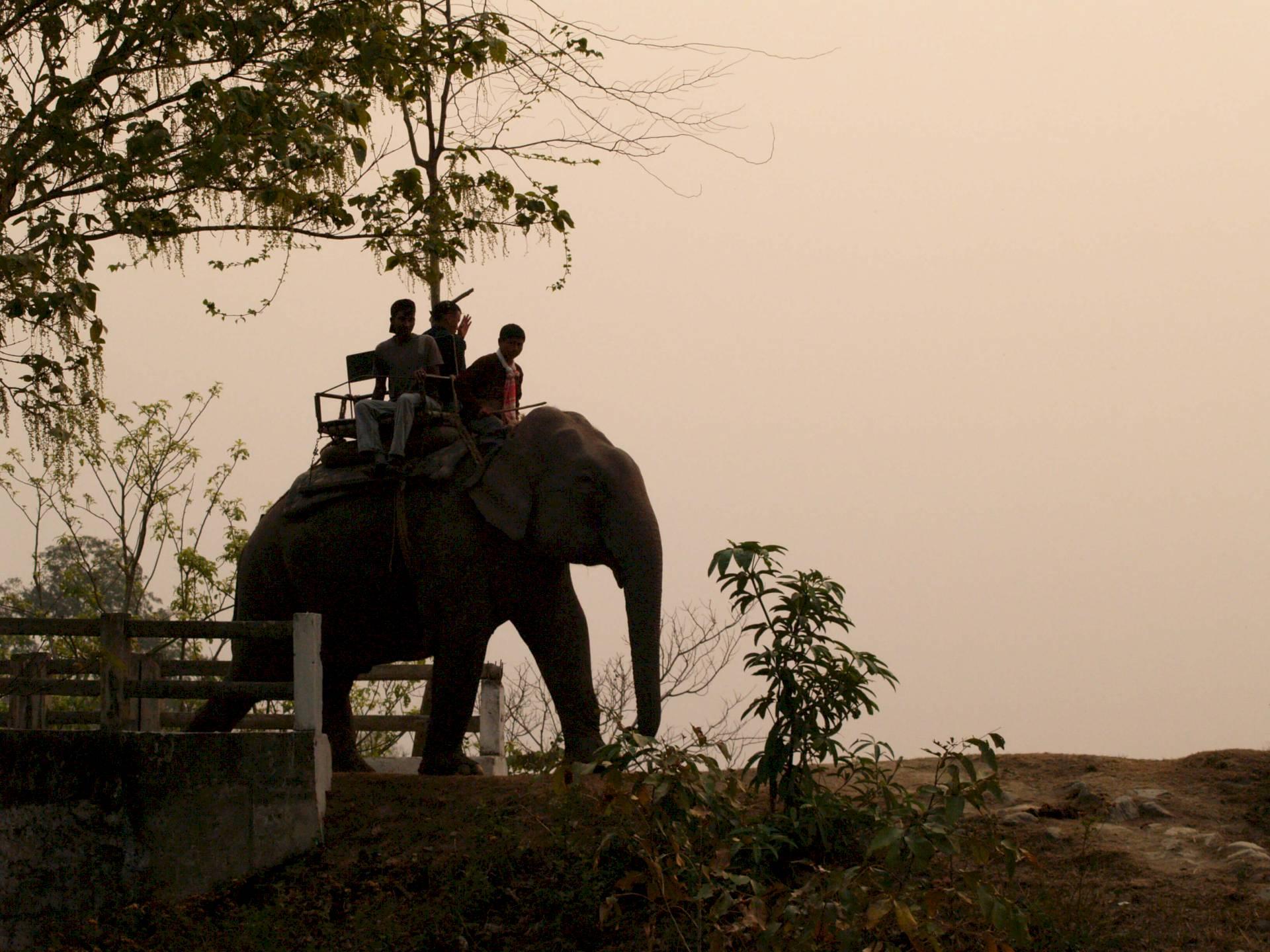 Kaziranga-Nationalpark