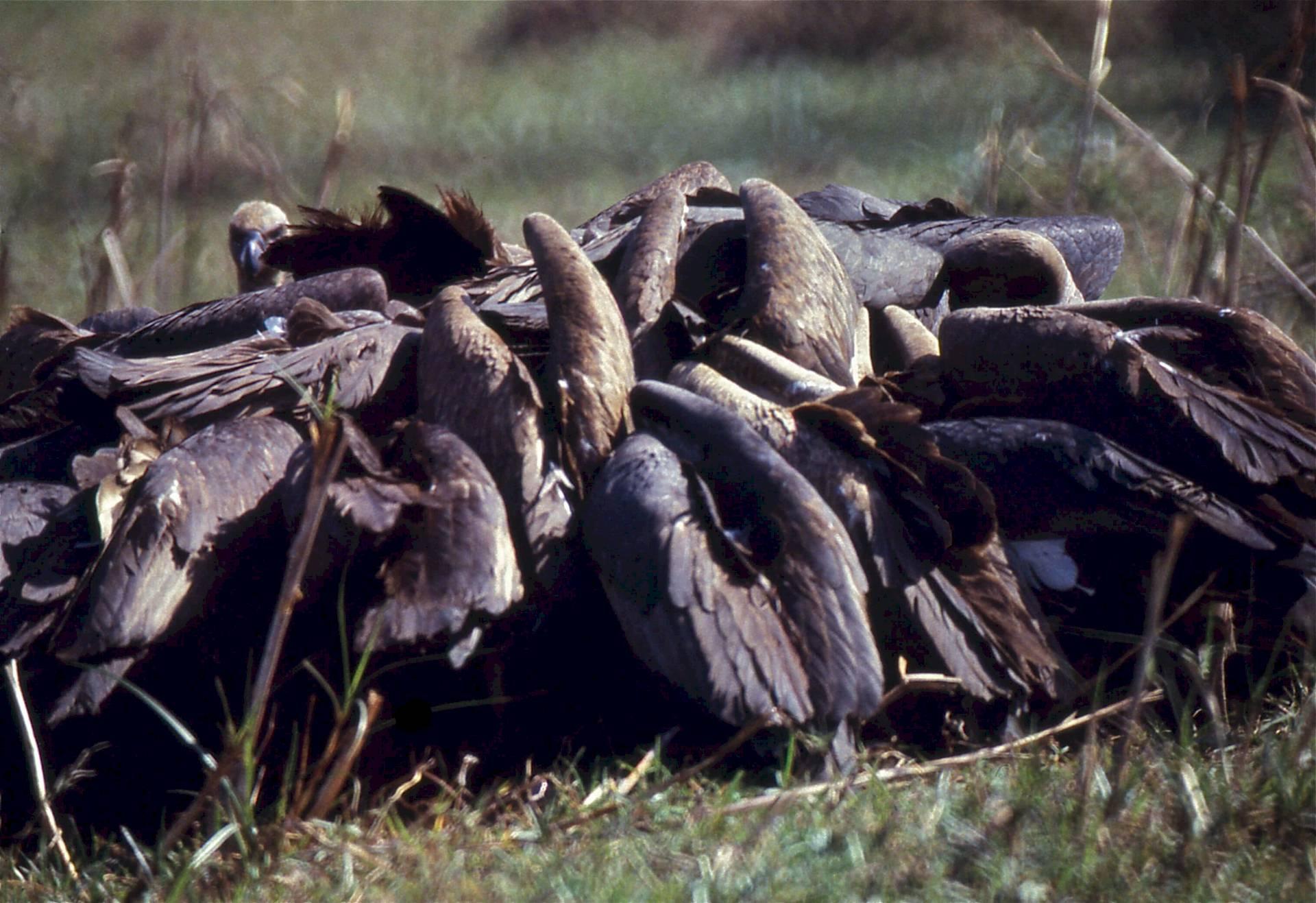 Keoladeo-Nationalpark