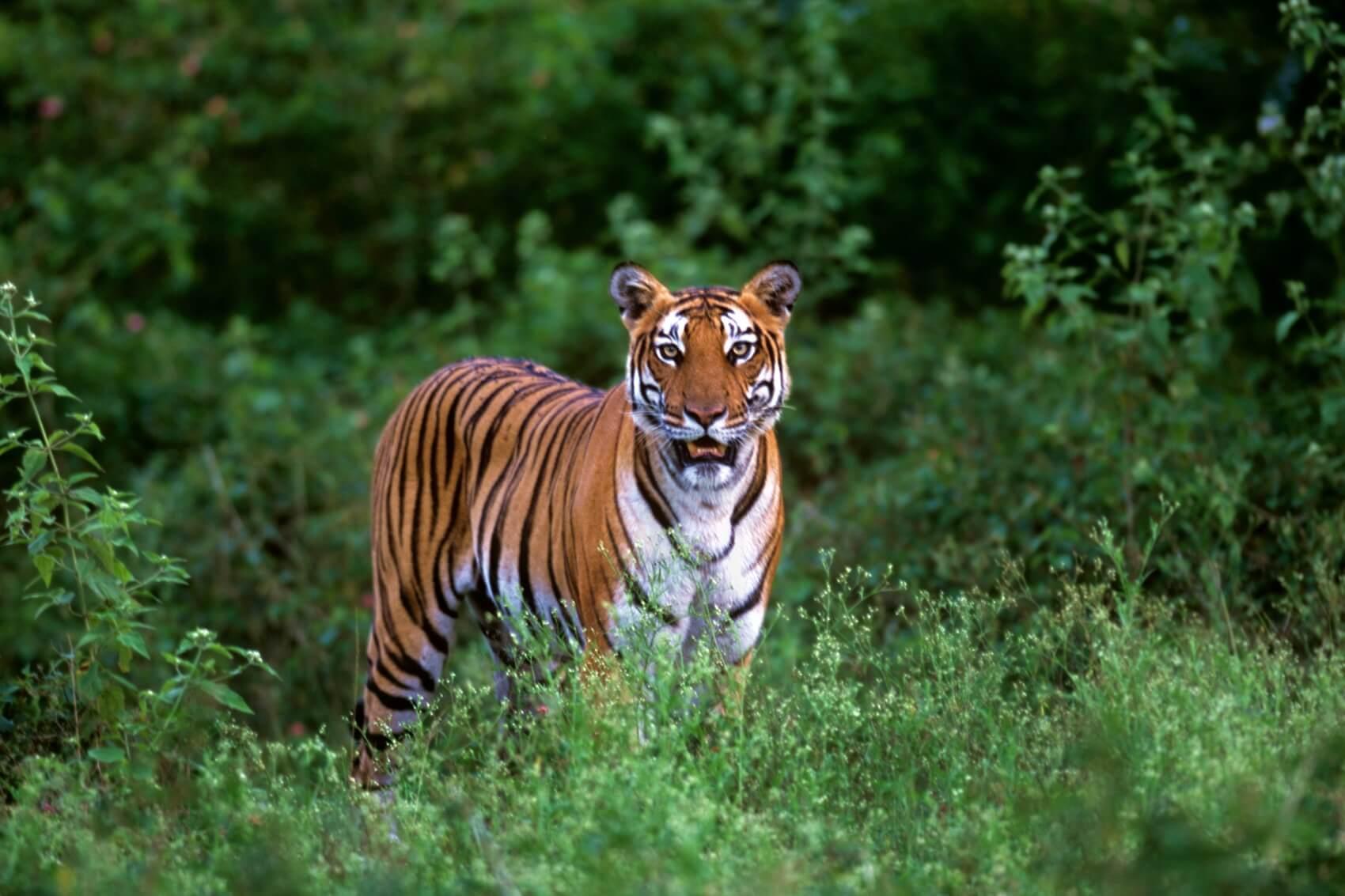 Nagarhole-National Park
