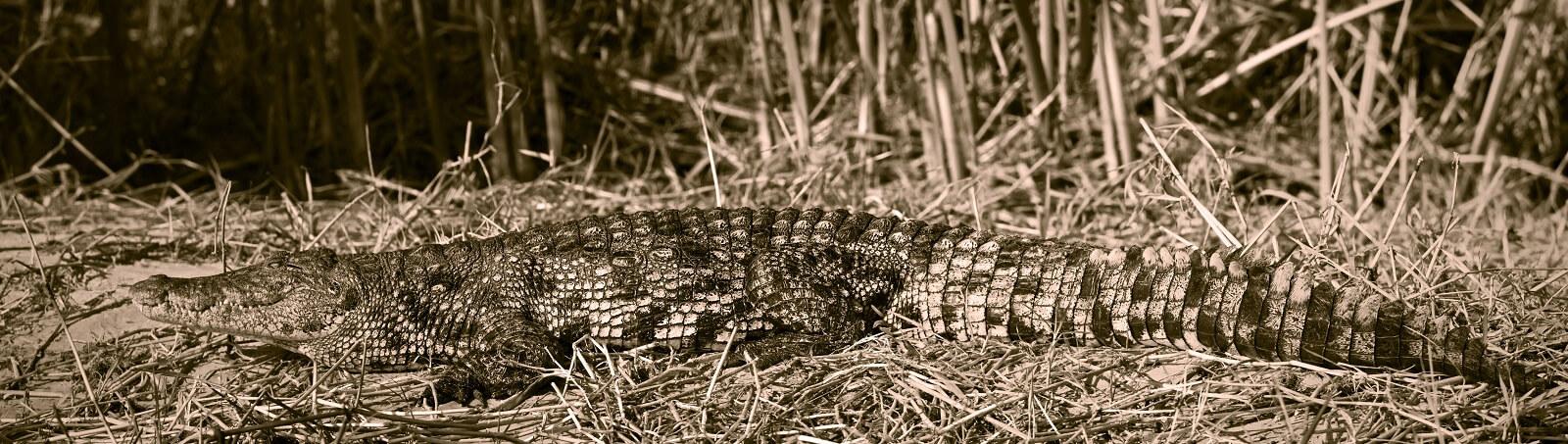 Okavango-Pfannenstiel
