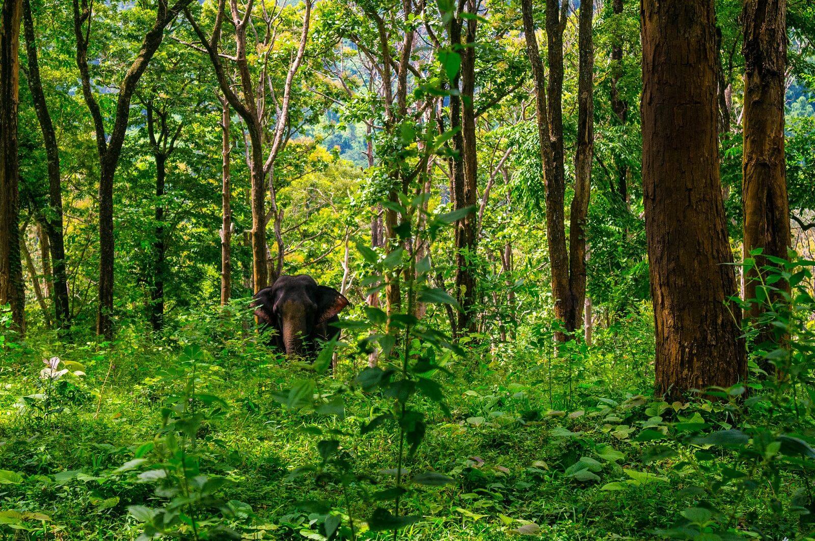 Waldbüffel und Waldelefanten am Strand