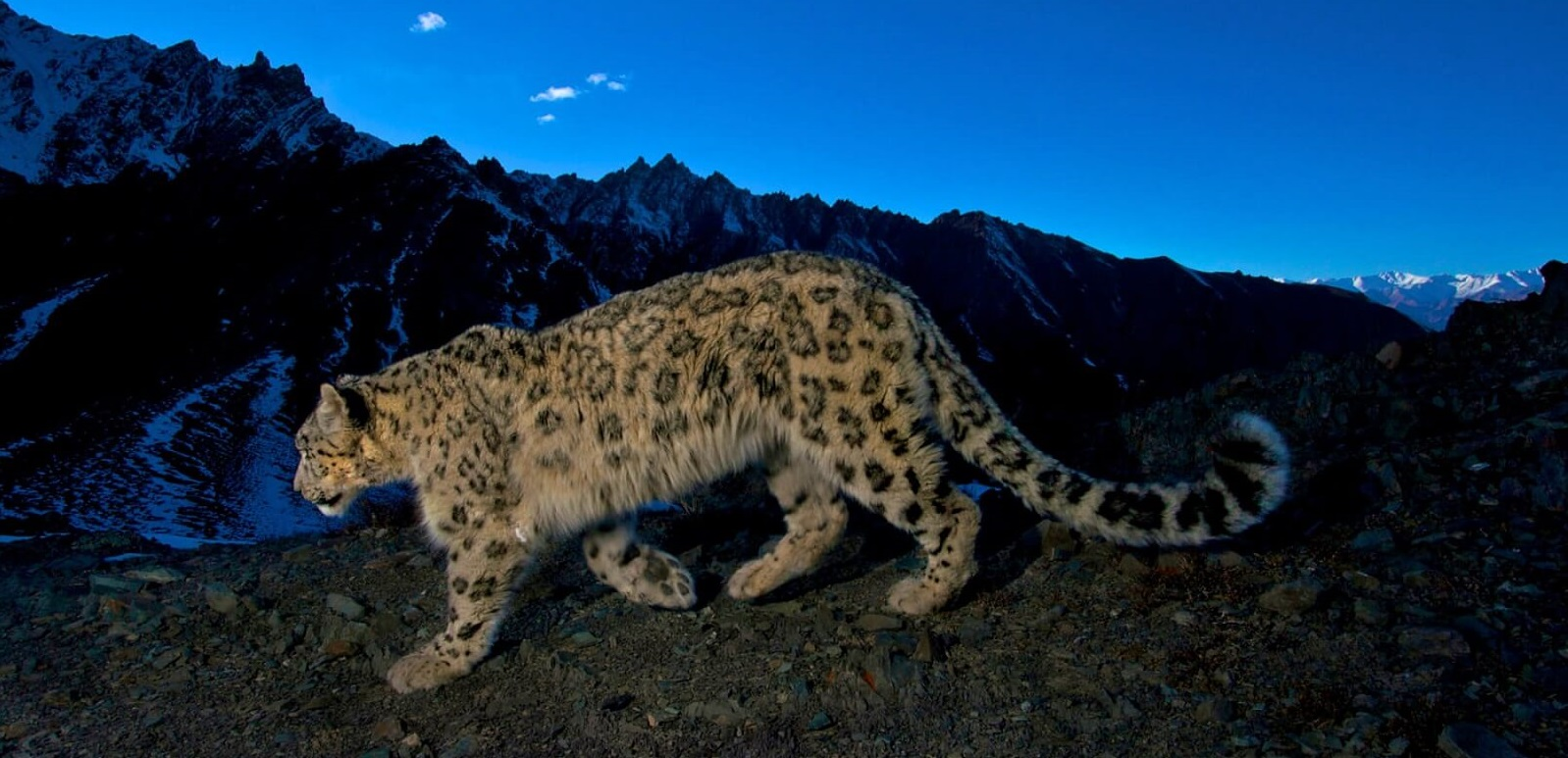 Schneeleopard-Trekking