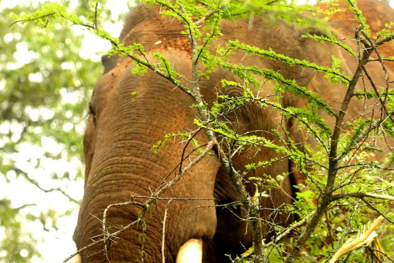 Bandipur-Nationalpark