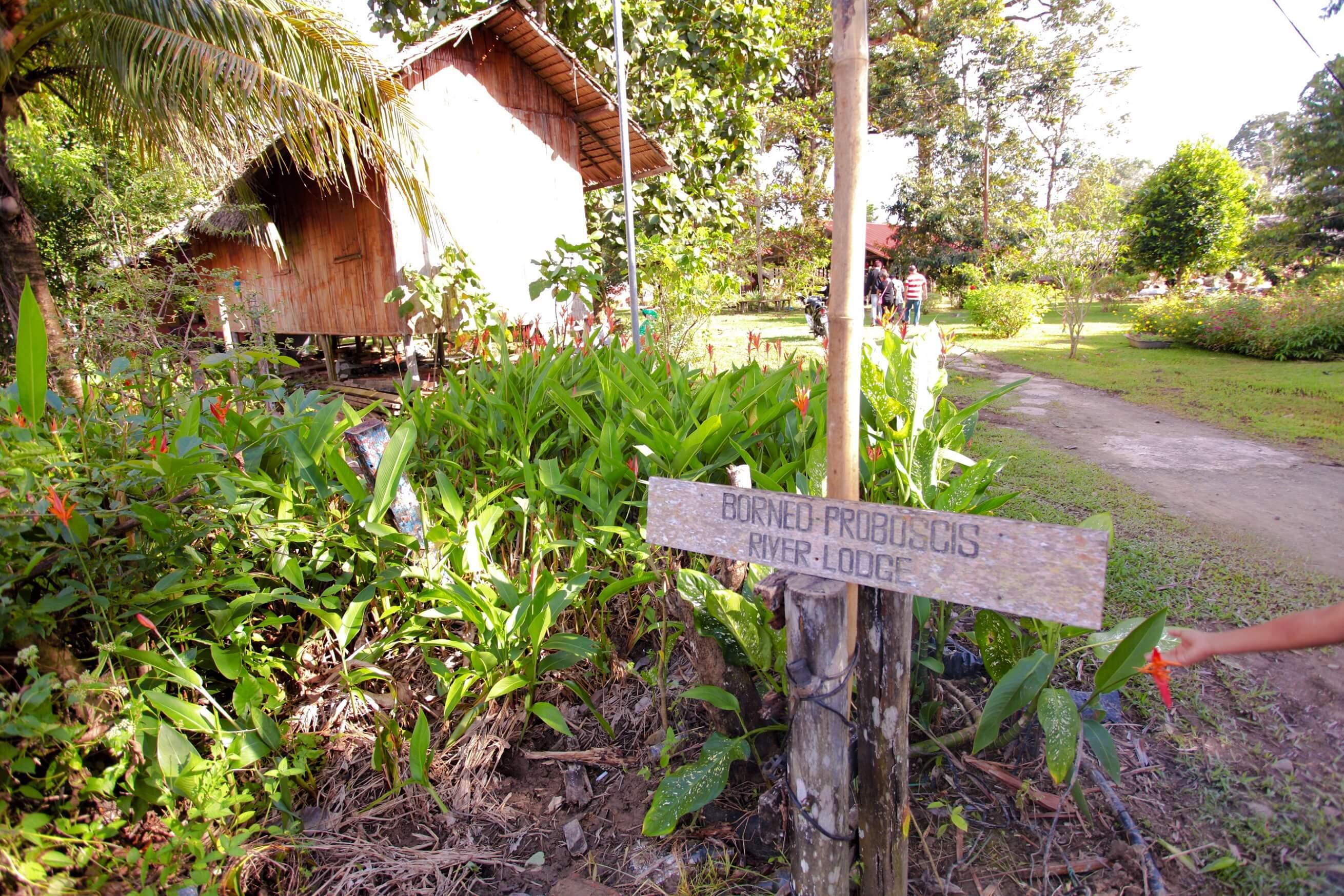 Melapi Proboscis Lodges