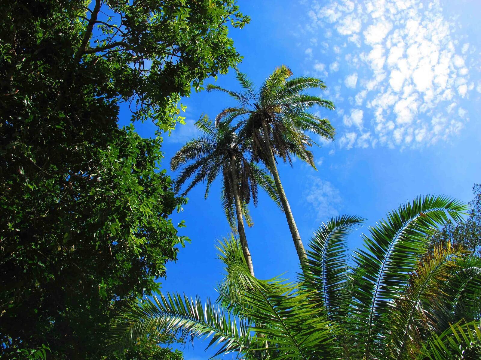 Tansania-Nordwesten