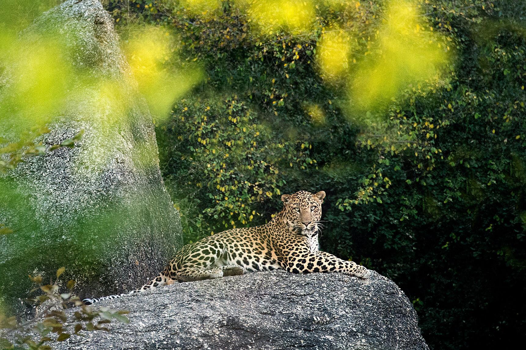 Leopards Lair