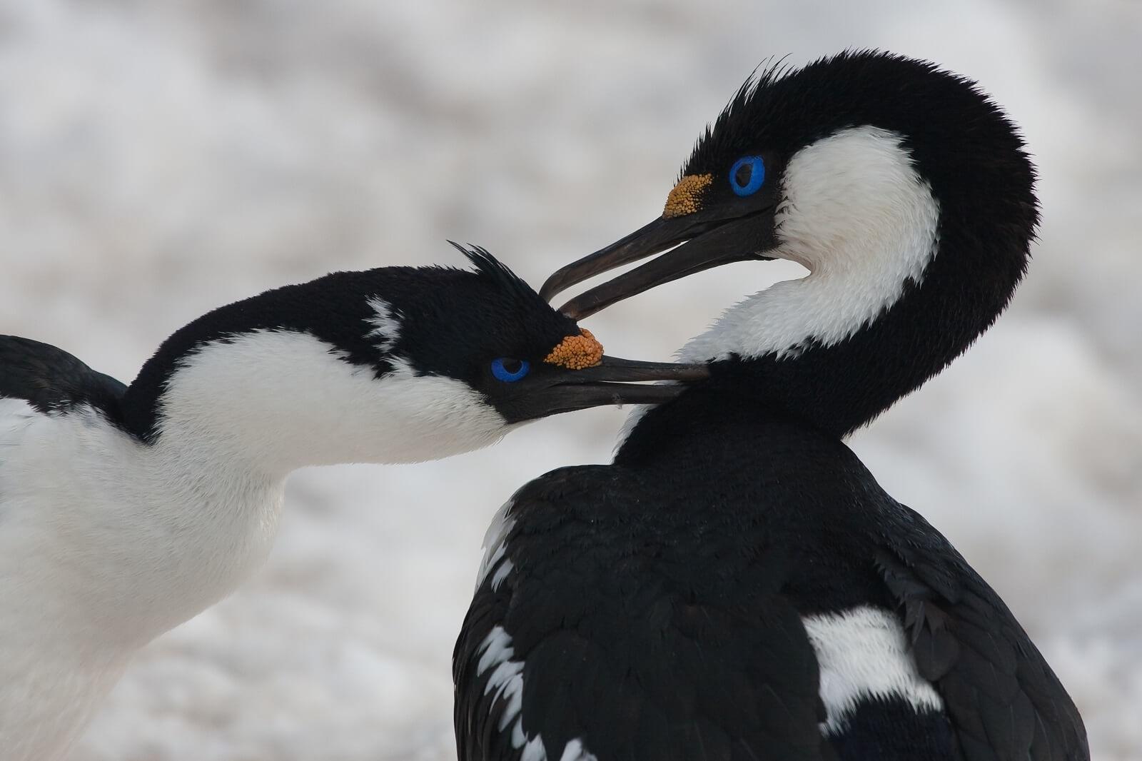 Antarktische-Halbinsel