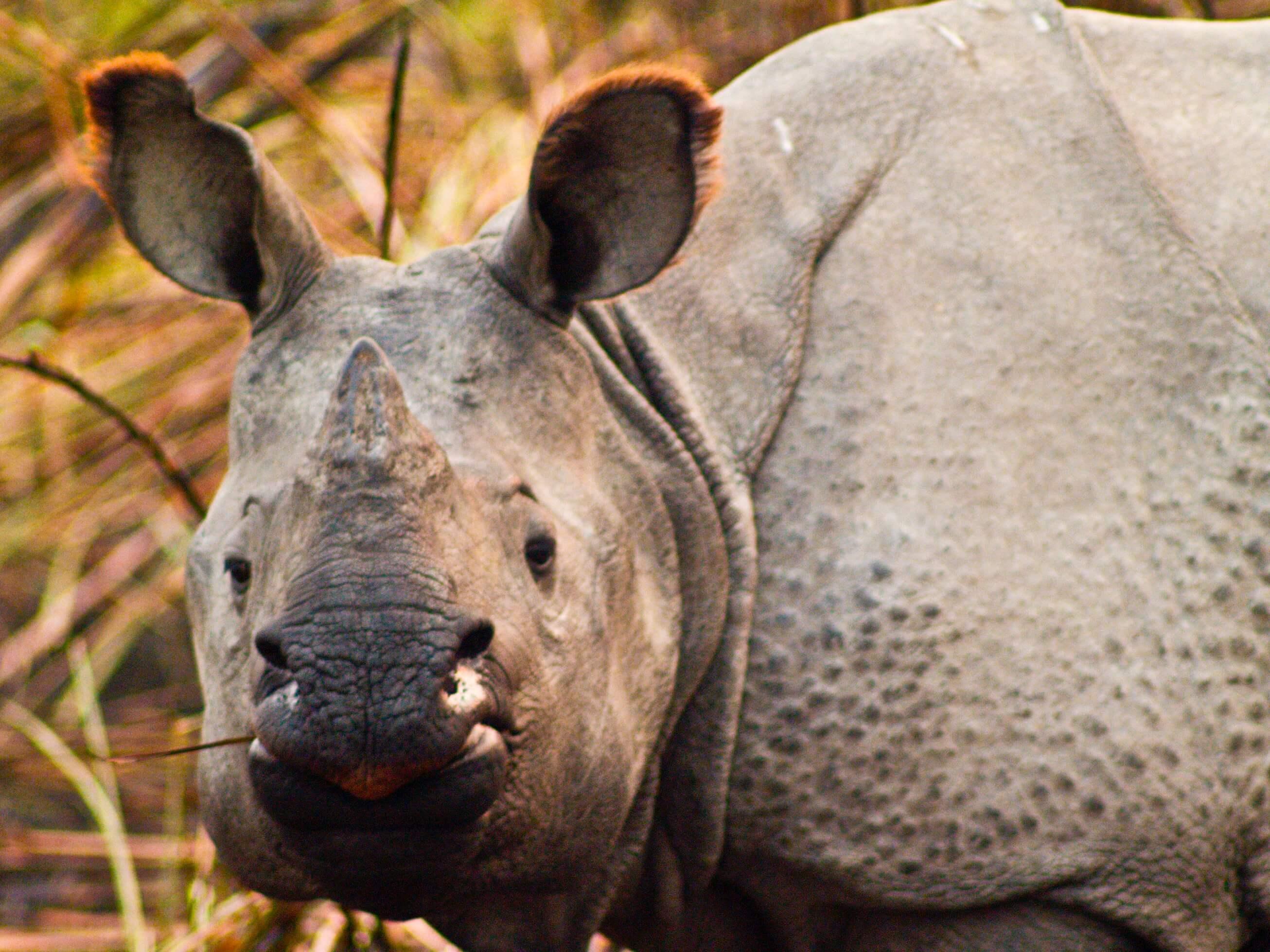 Camp Rhino