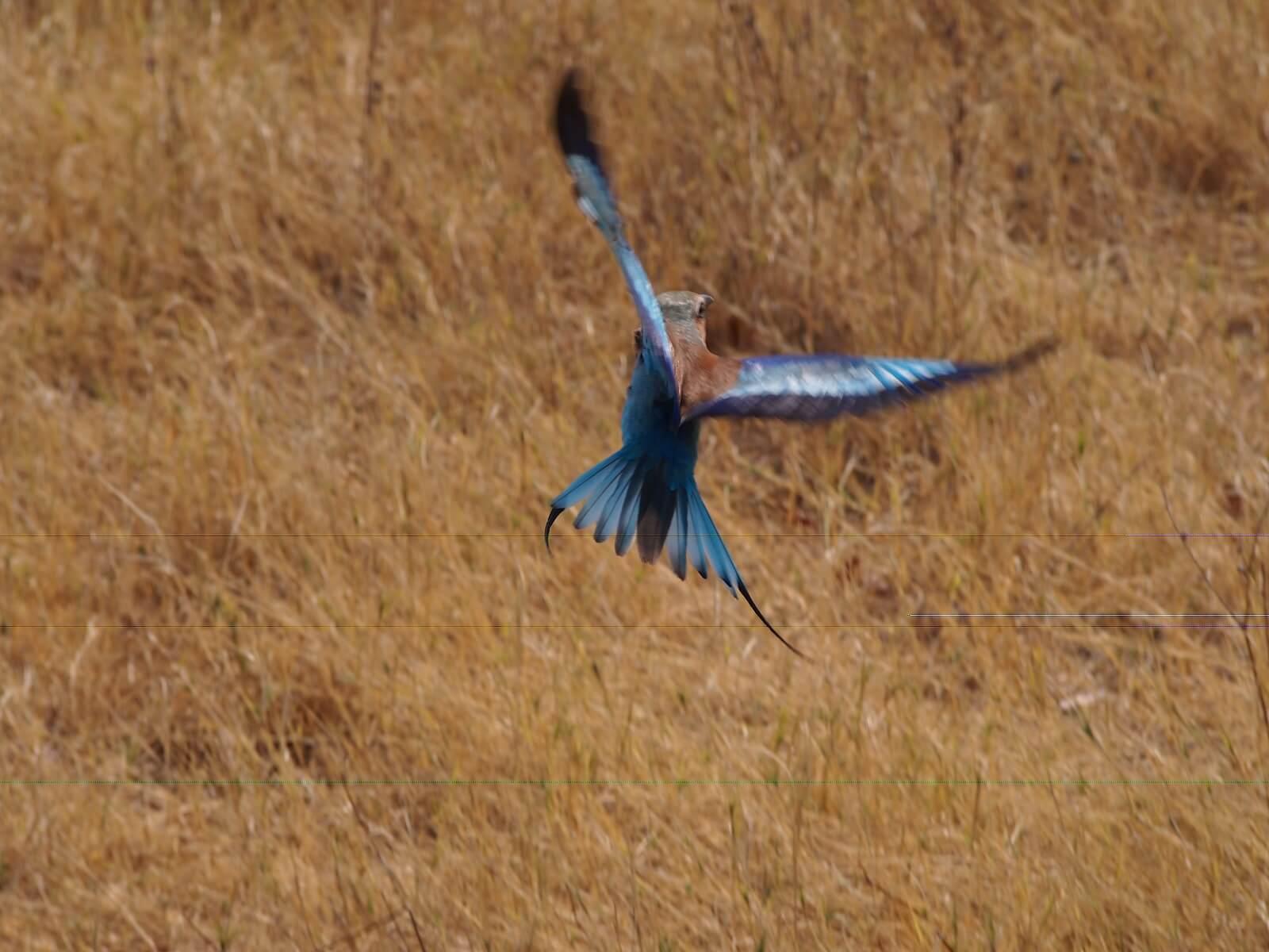 Okavango-Moremi