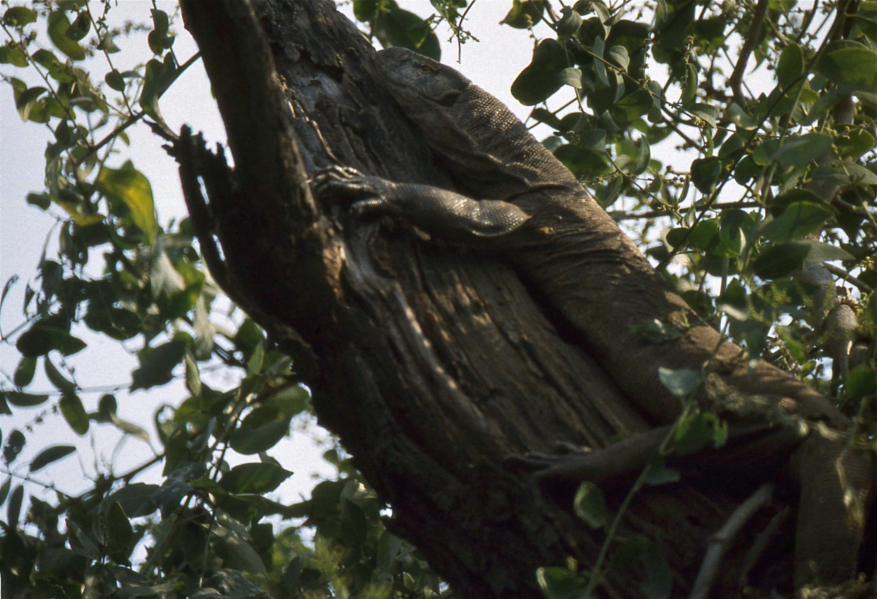 Falcon Guesthouse