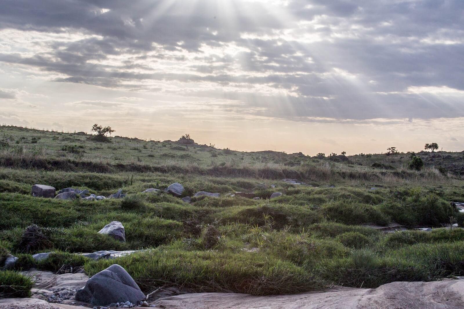 Serengeti-Lobo