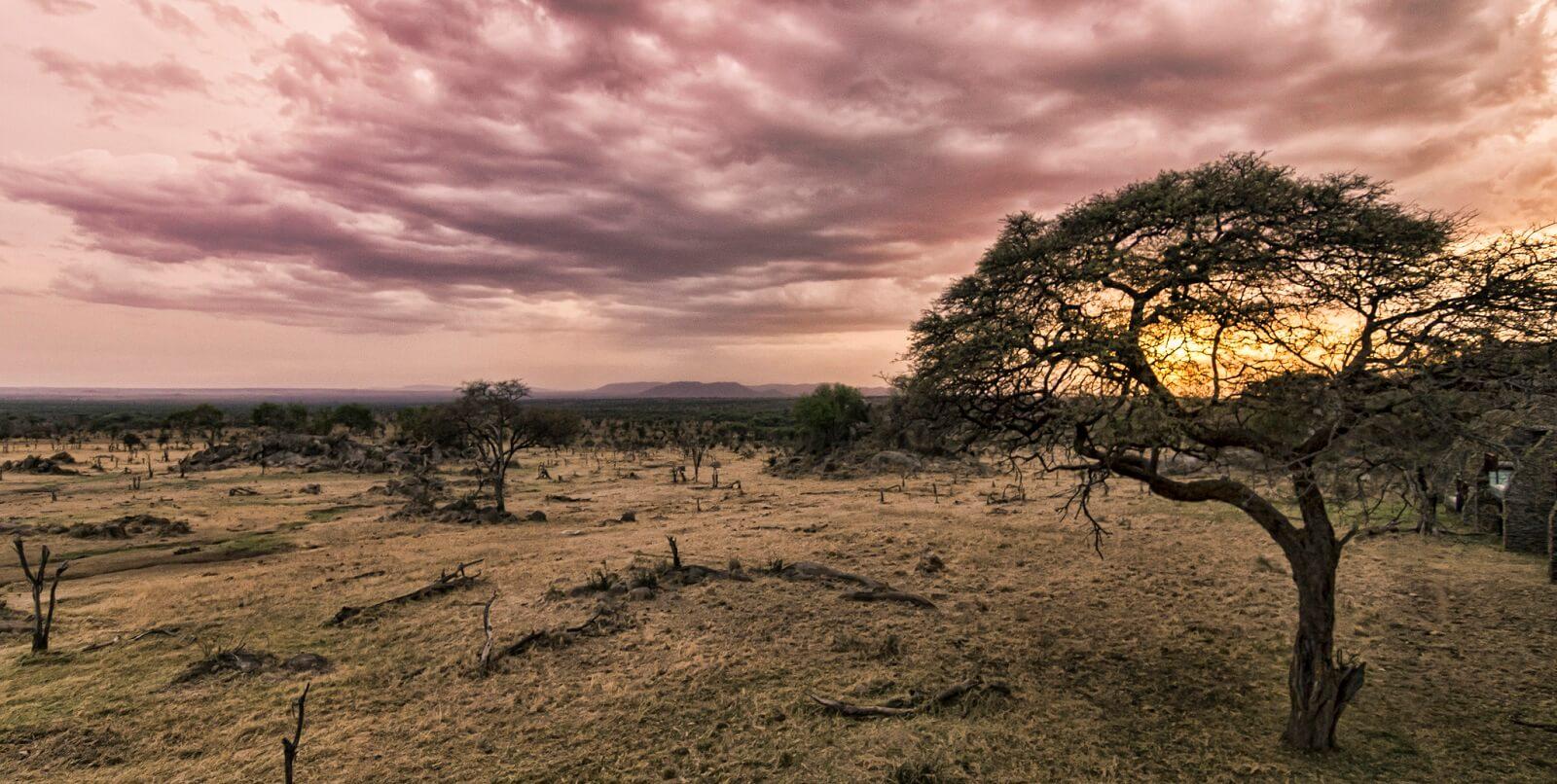 Tanzania Mobile Bush Camp