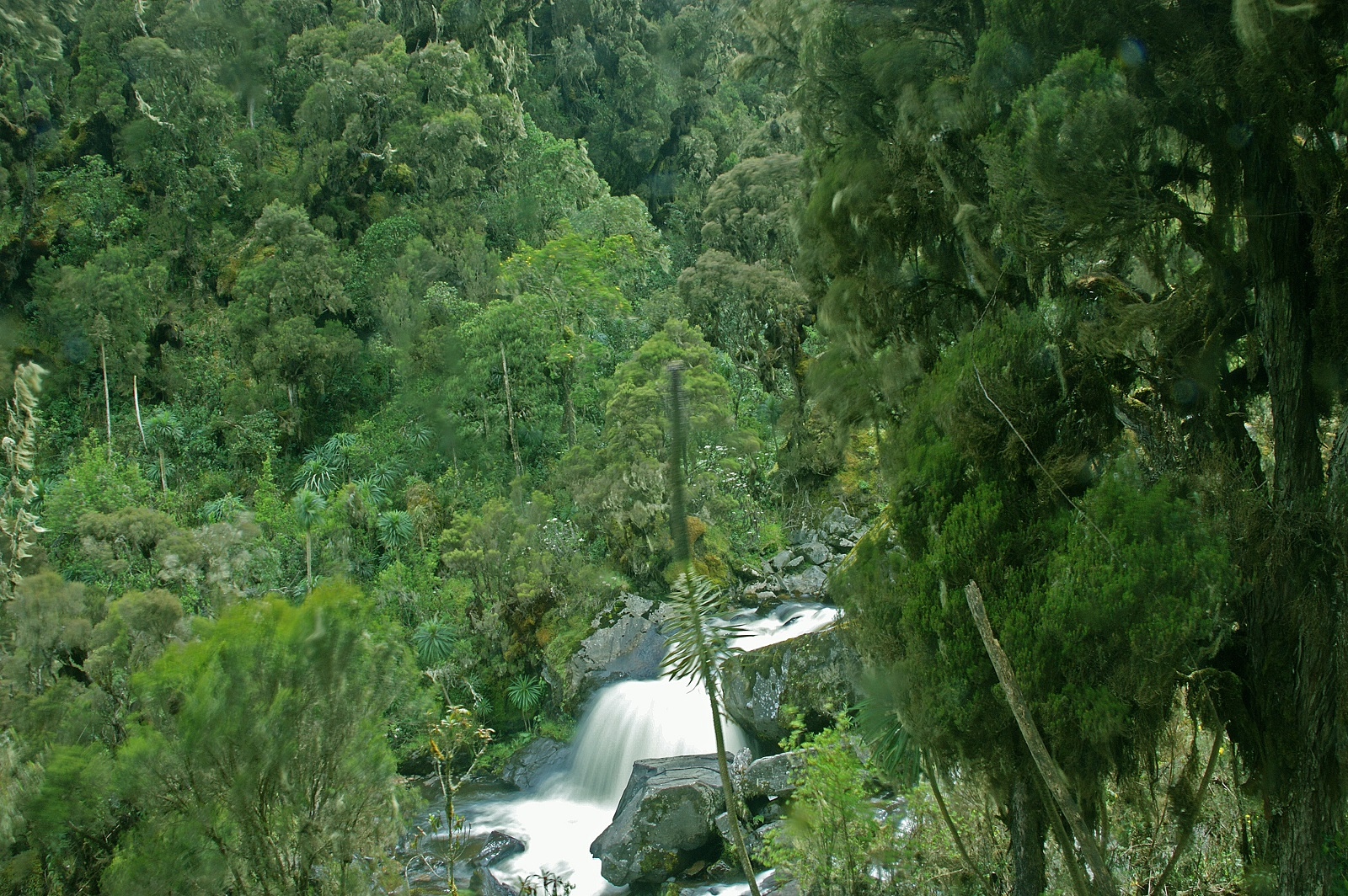 Ruwenzori-Mountains-Nationalpark