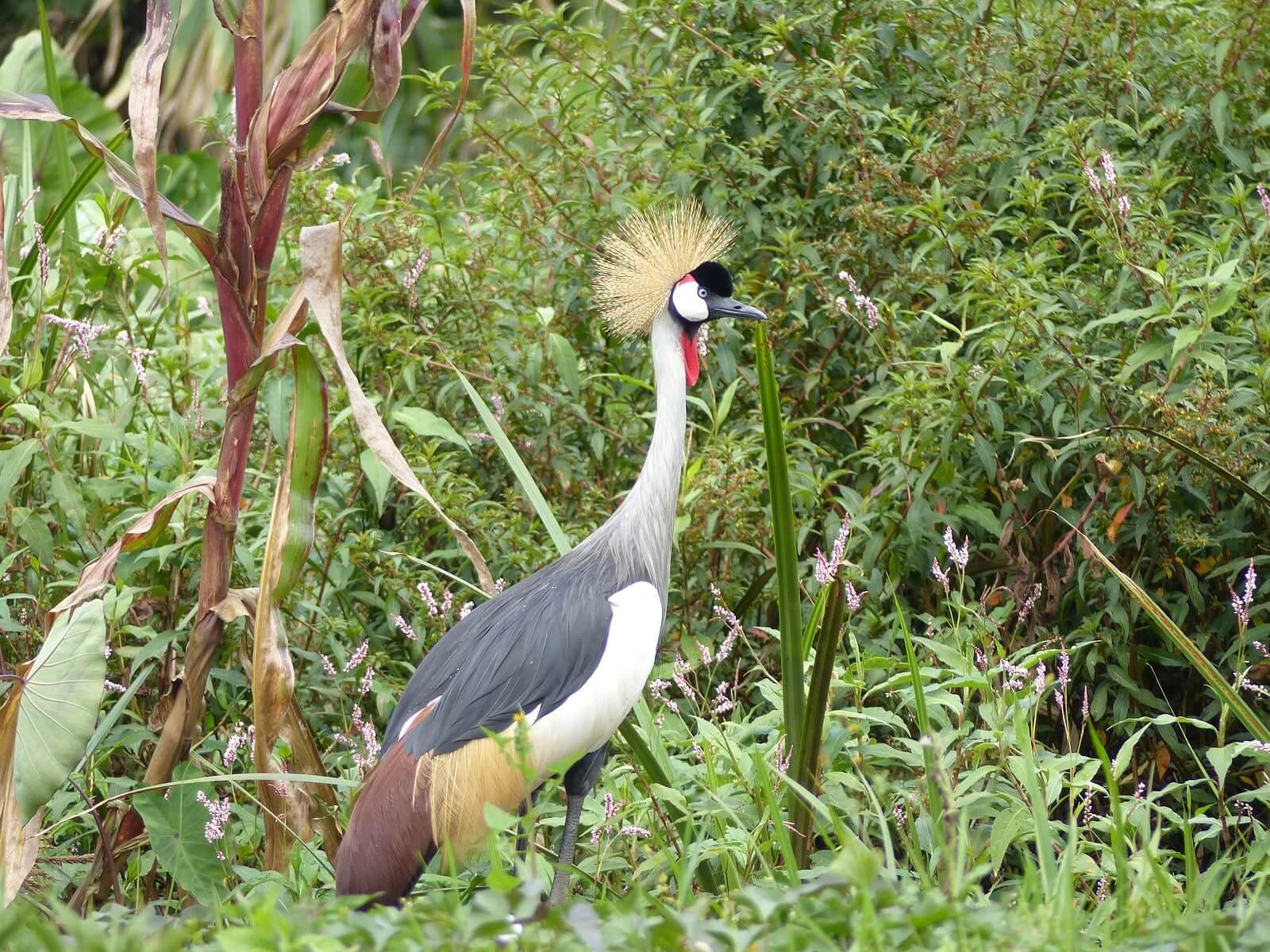 Mgahinga-Nationalpark und Lake Mutanda