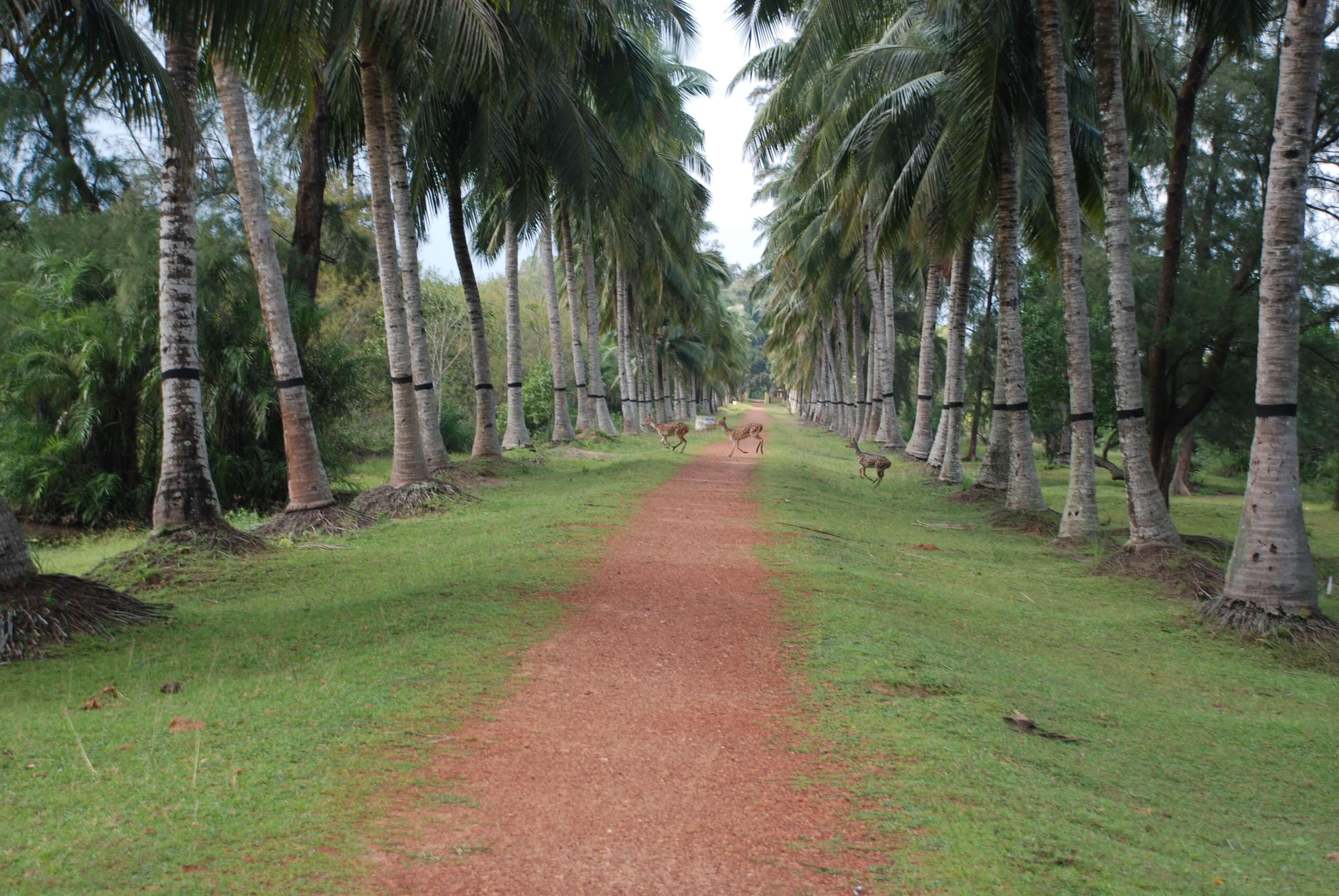 Nature Camp Bhitarkanika