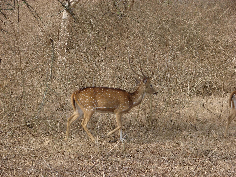 The Serai Bandipur