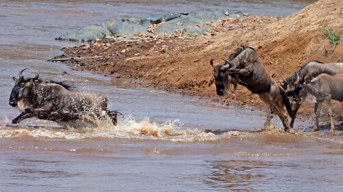 Tansania: Die große Migration Mara 2020