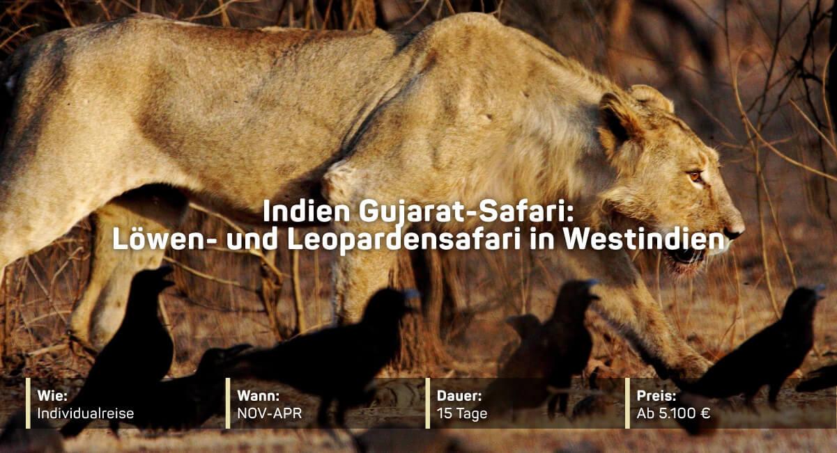 Indien Gujarat-Safari
