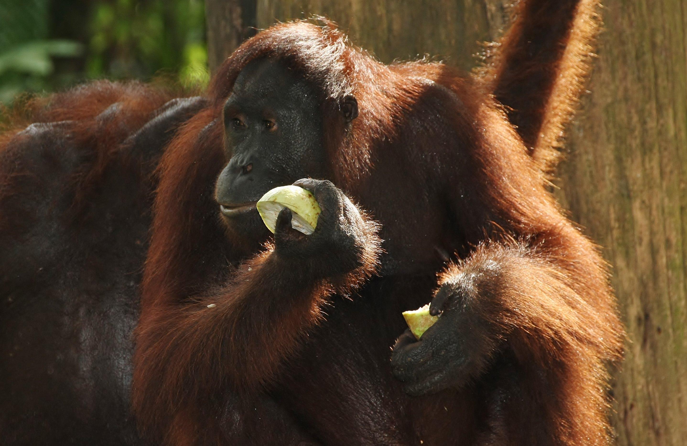 Borneo: 06.09. – 21.09.2013