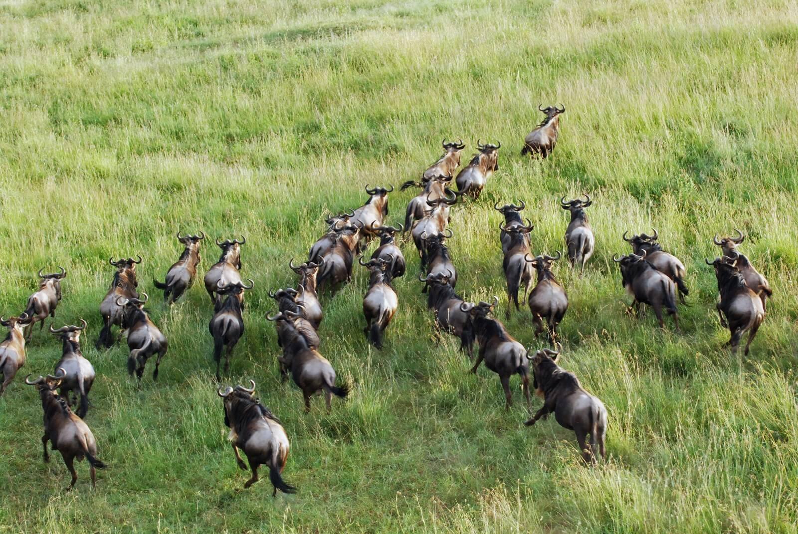 Tansania: Die große Migration - Ndutu