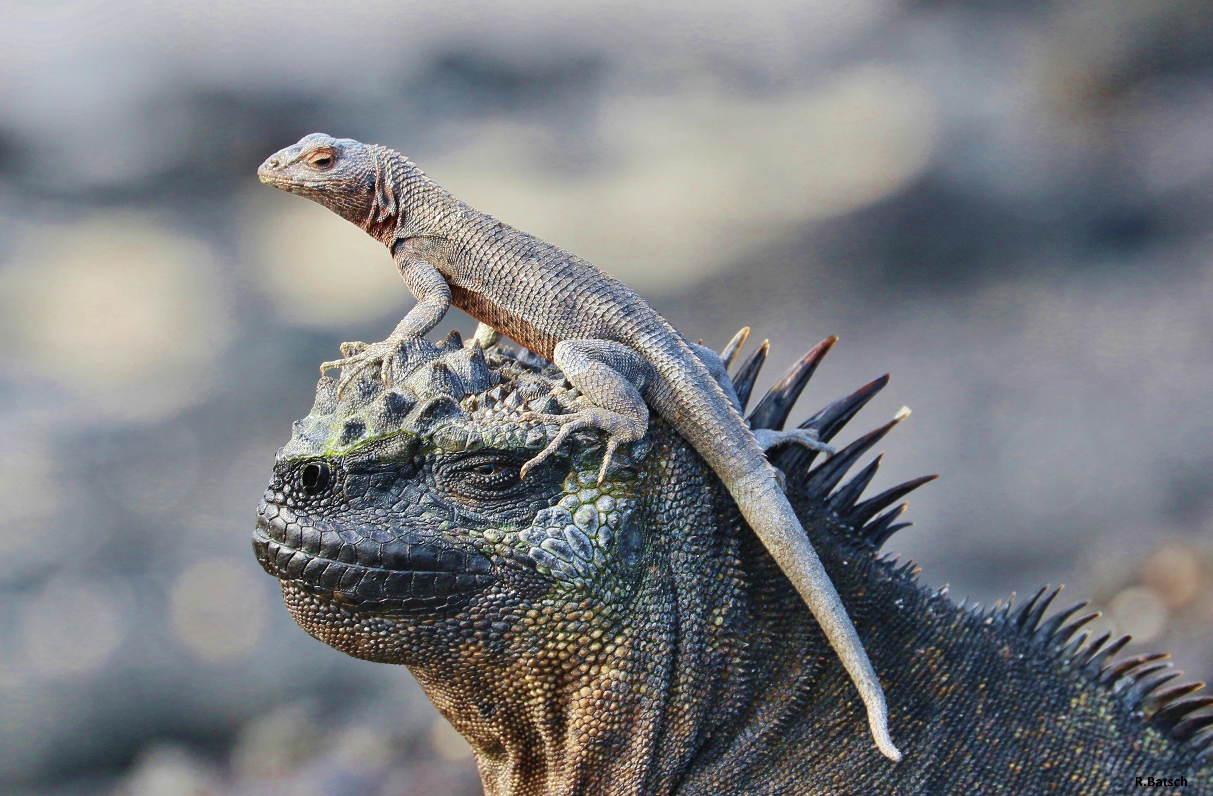 Ecuador und Galapagos-Reise: 10.01. – 31.01.2016