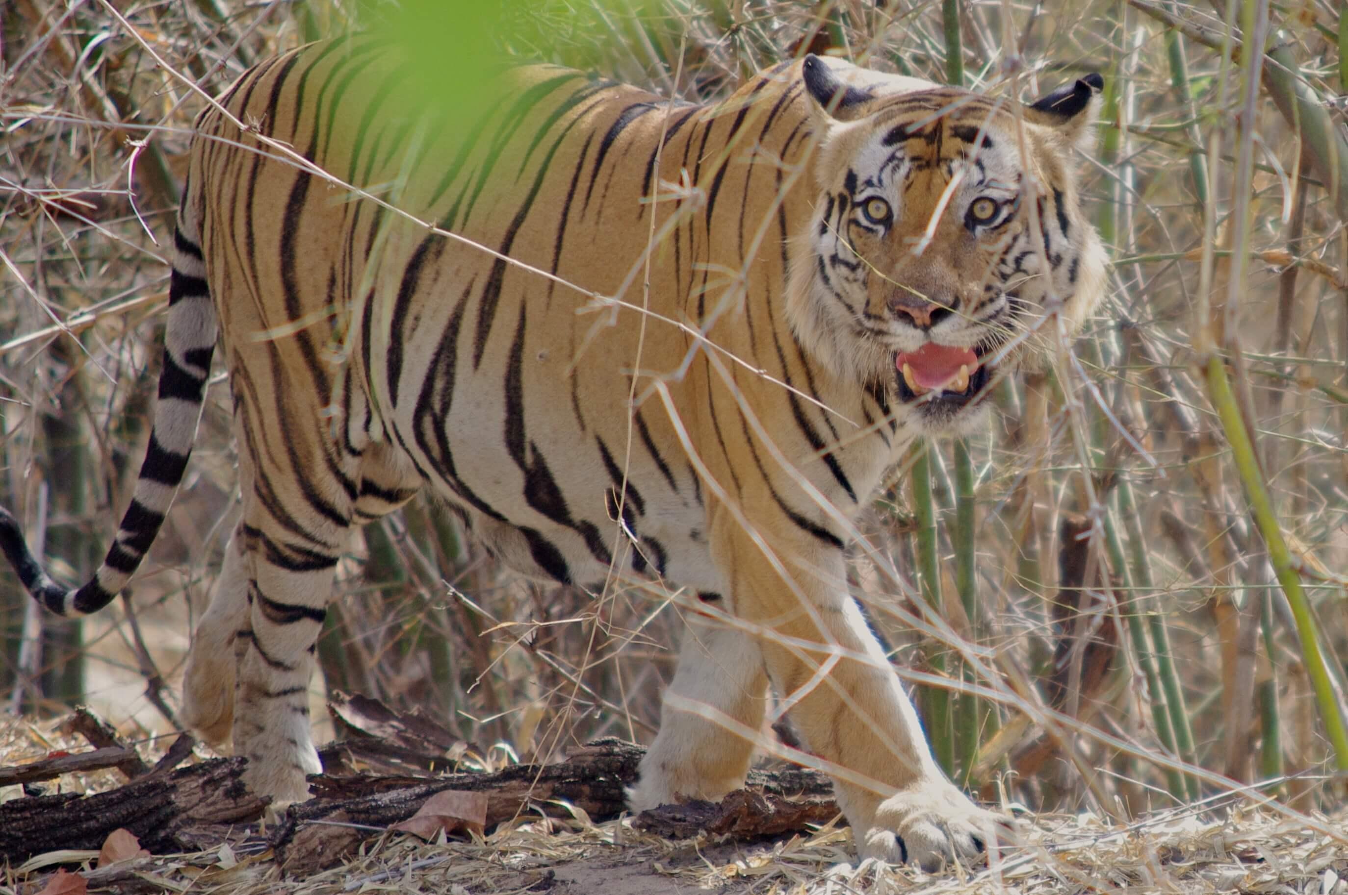 Indien Klassik Tigersafari mit Agra